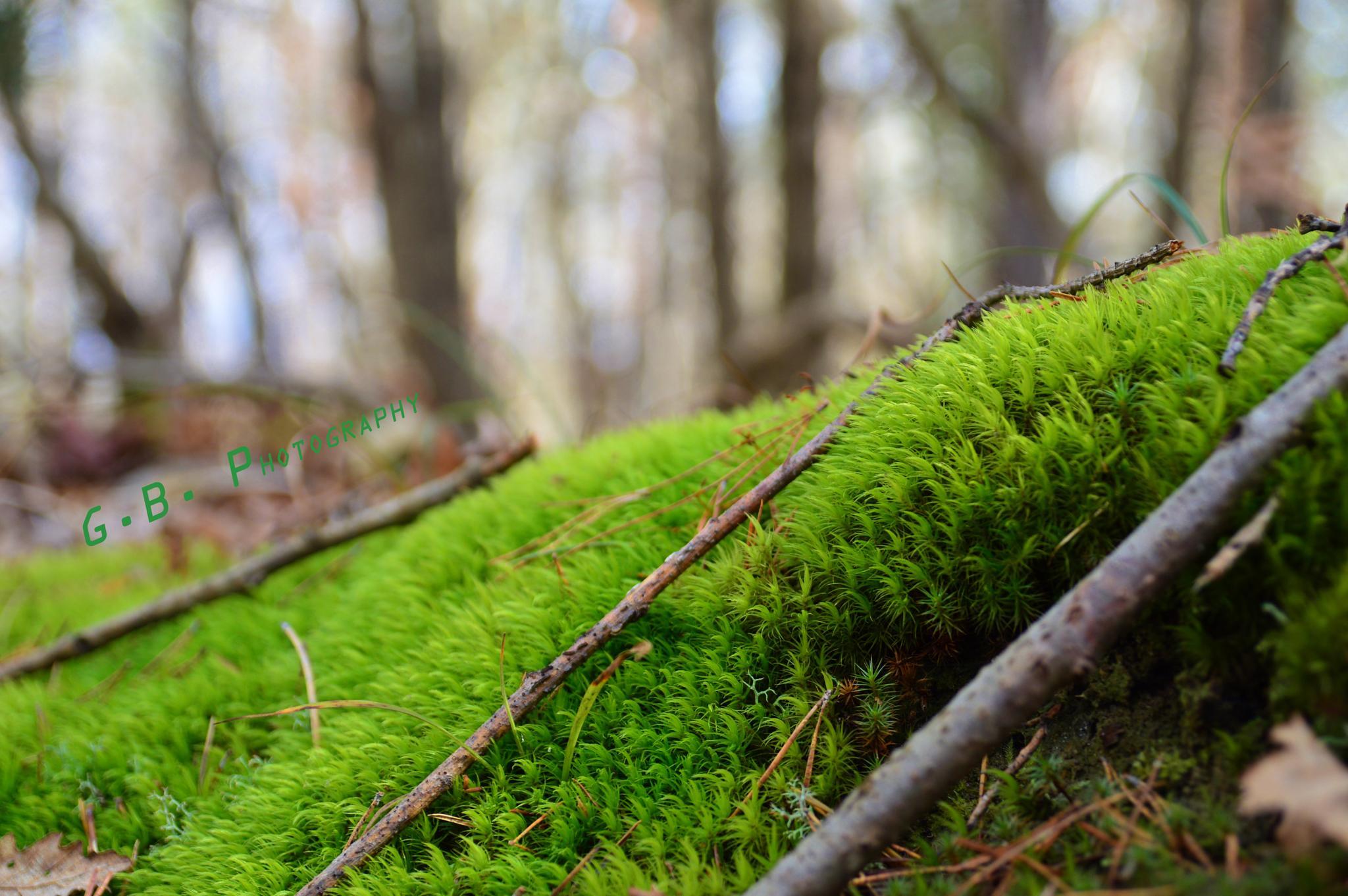 Green in the woods by Genadiy Boyanov