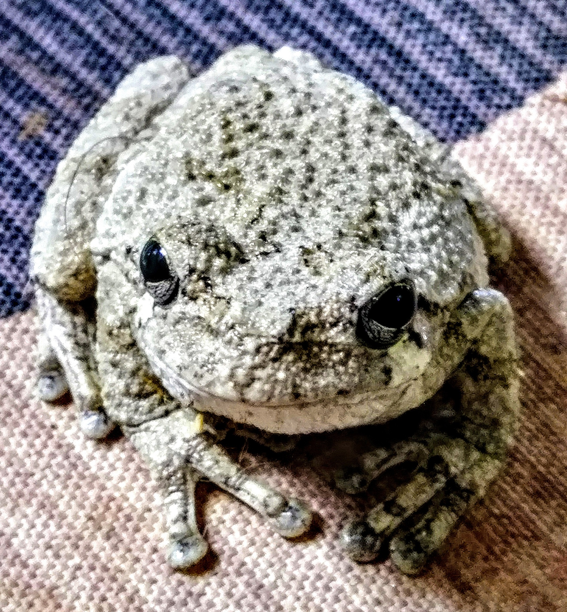 A Tree Frog by rodney.adams.313371