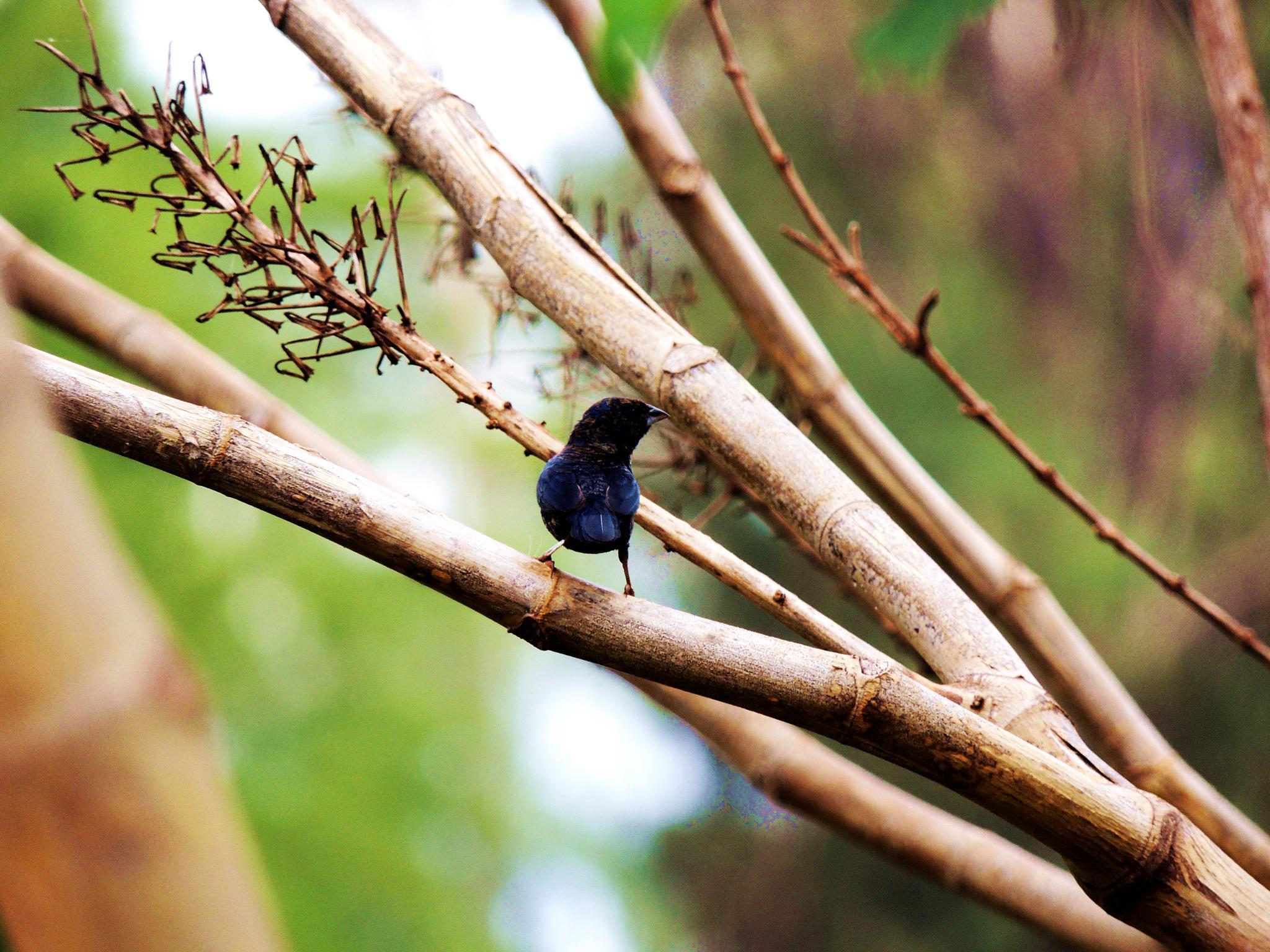 Birds of Cerrado by Alison Machado