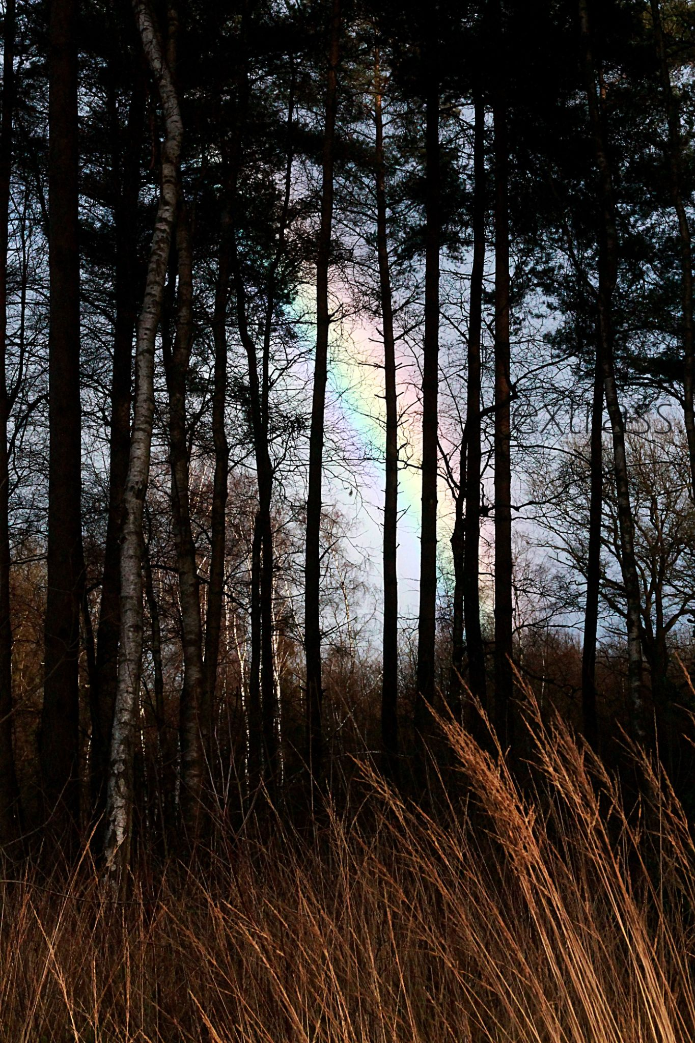 rainbow .  by extrass