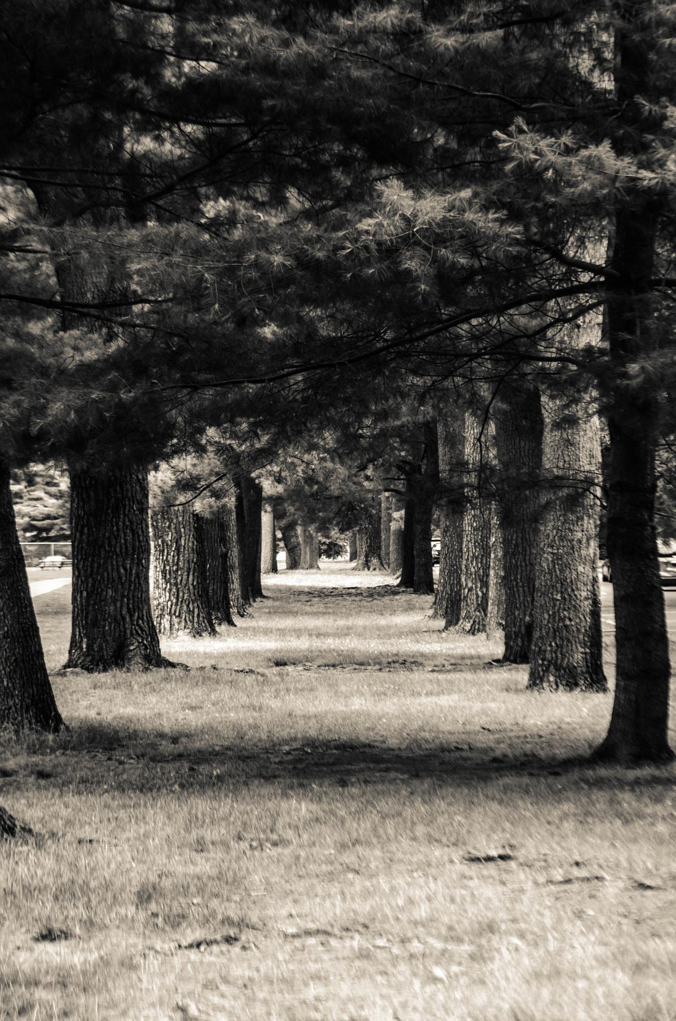 Tree Path by davidpinter