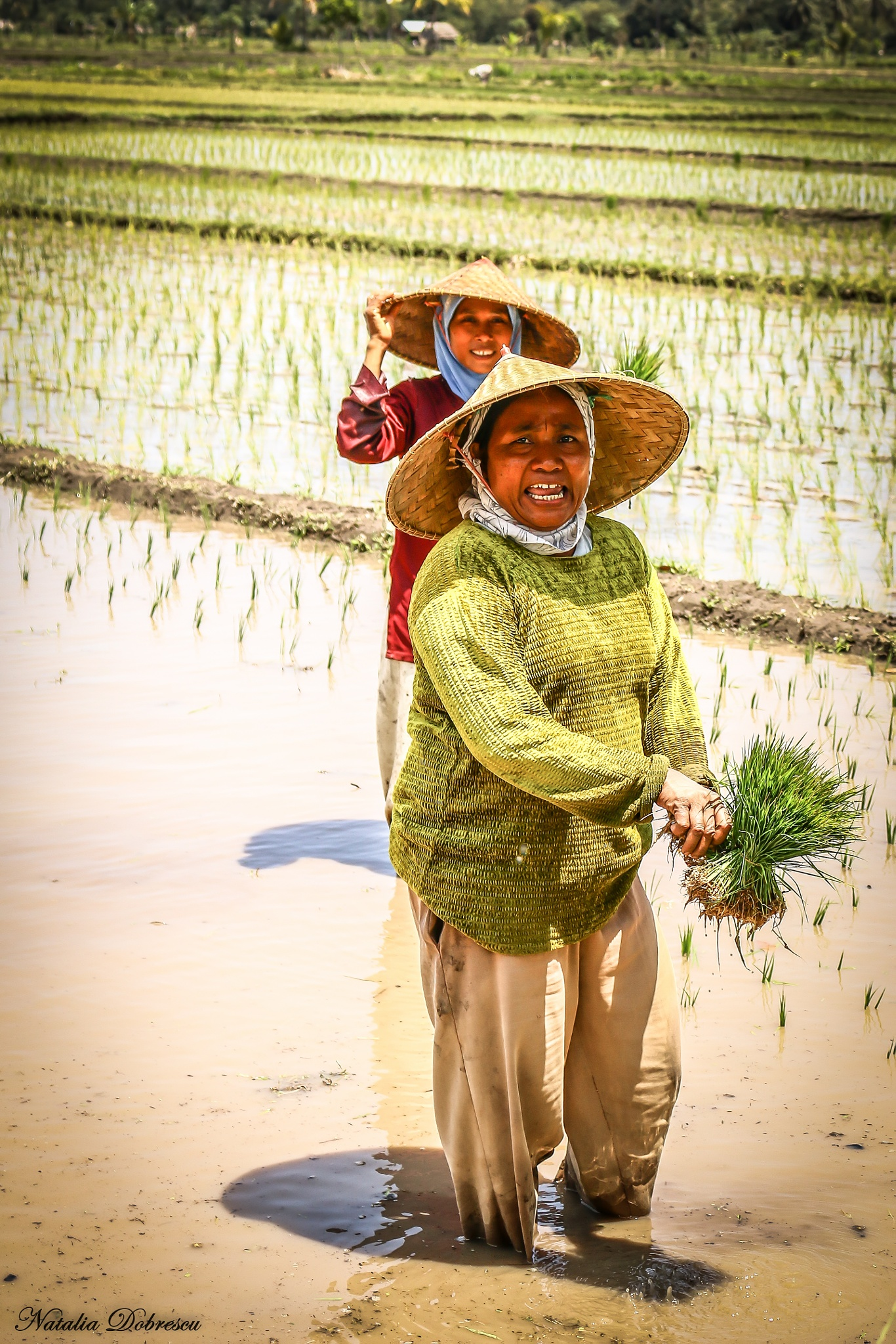 Working in the rice fields by Natalia Photography