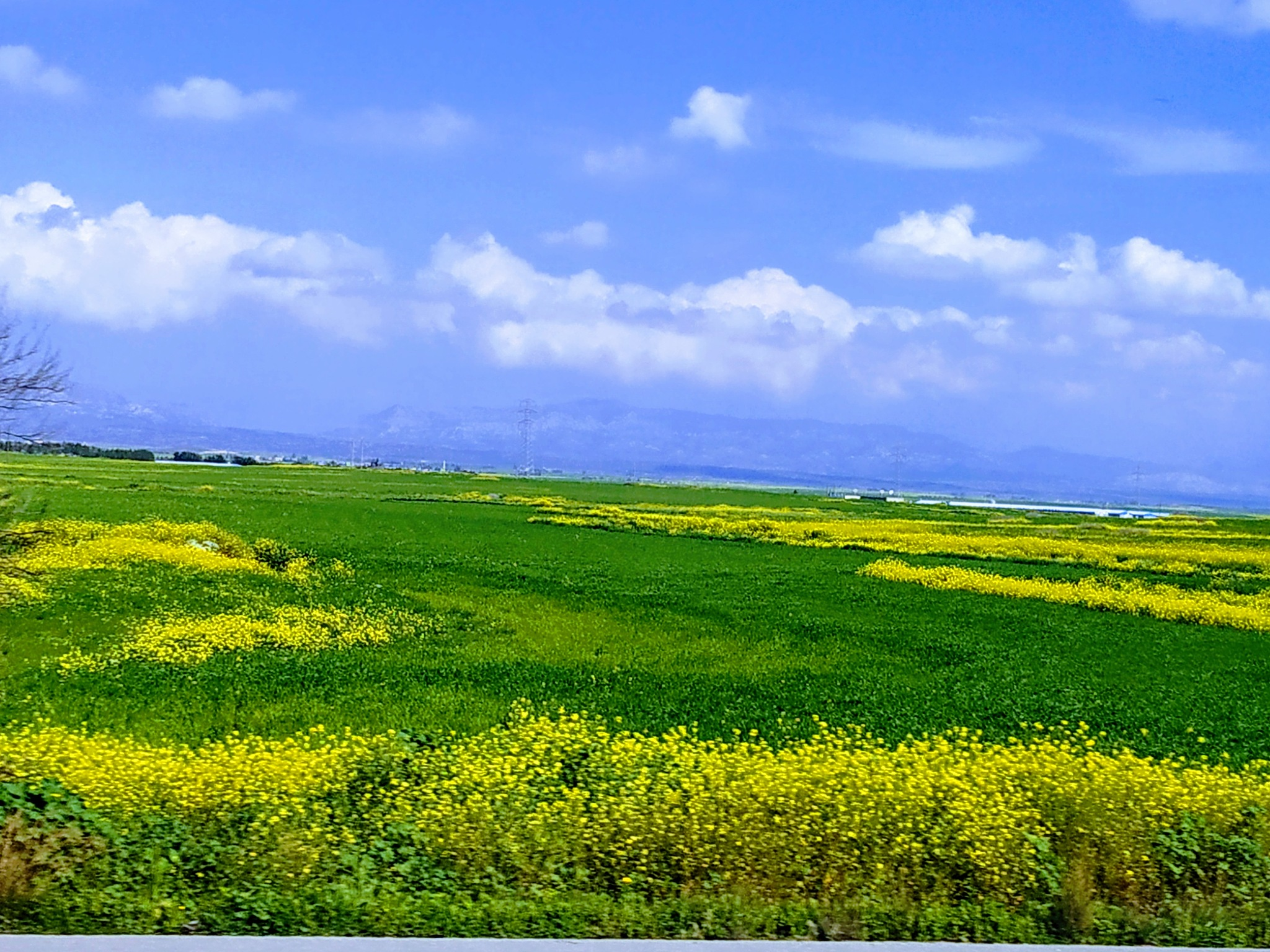 Photo in Landscape #farm #yellow flowers #sky #clouds #cyprus