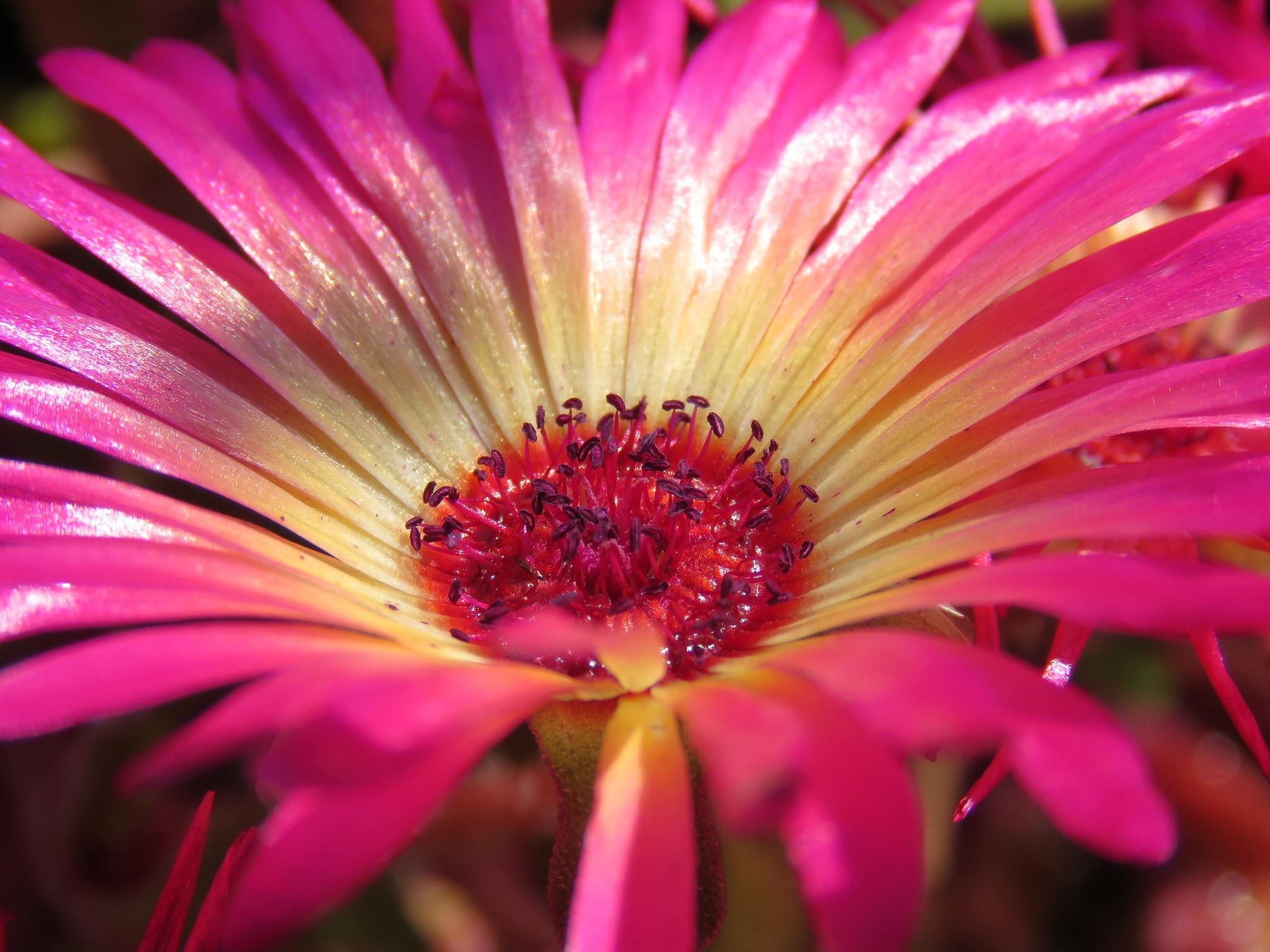#Flower by marit