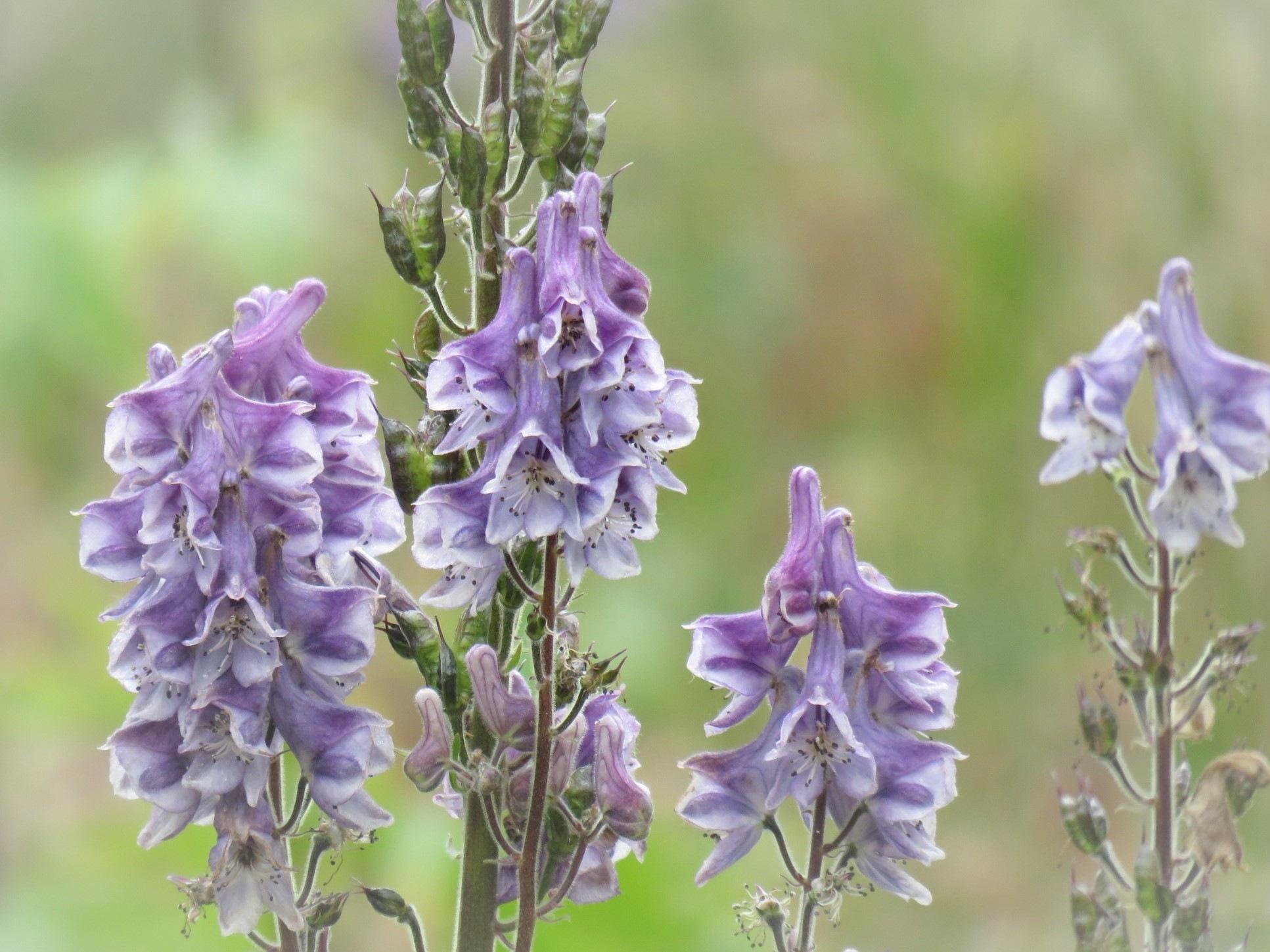 #Wild flower by marit