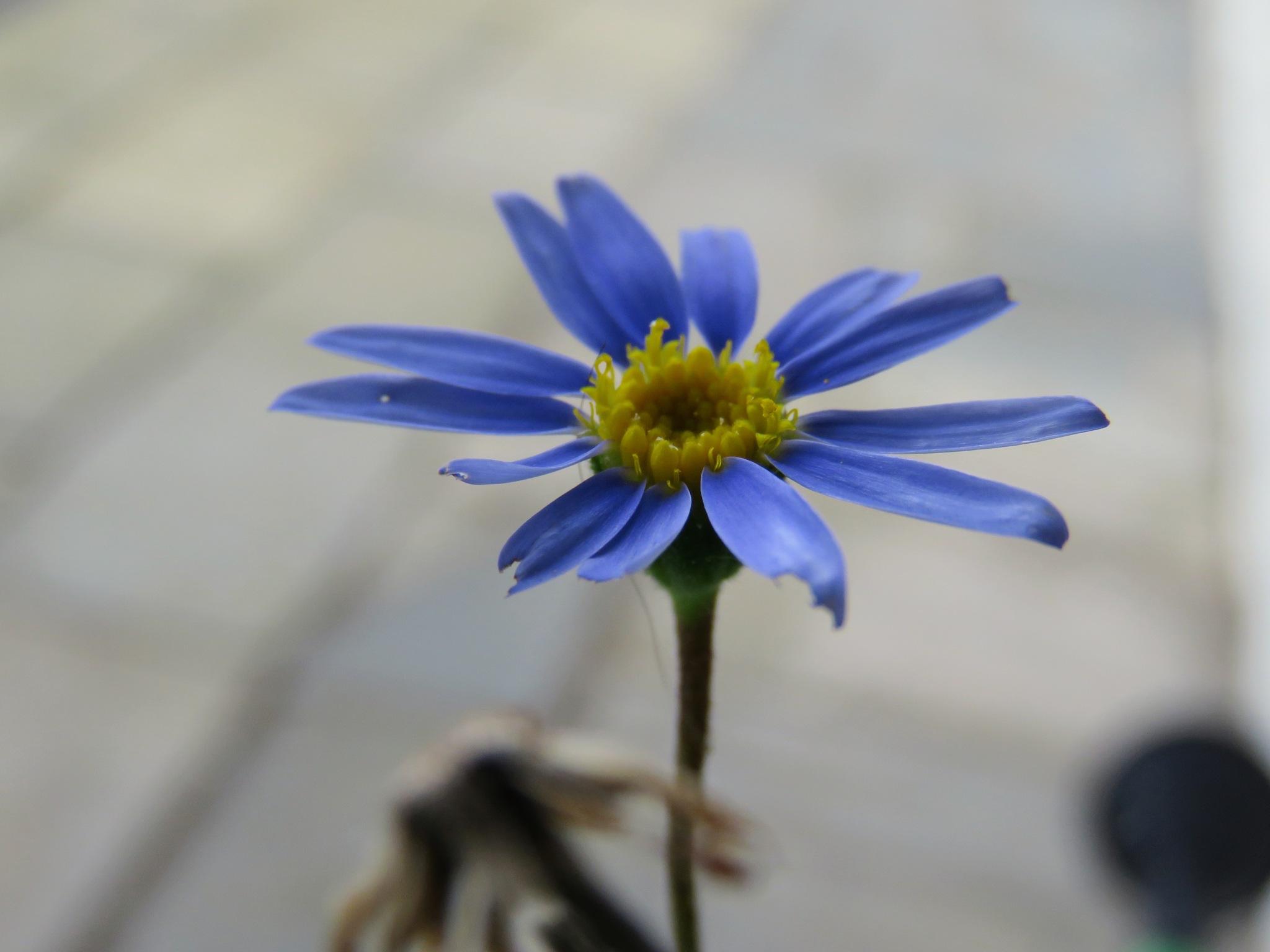 #Blue by marit