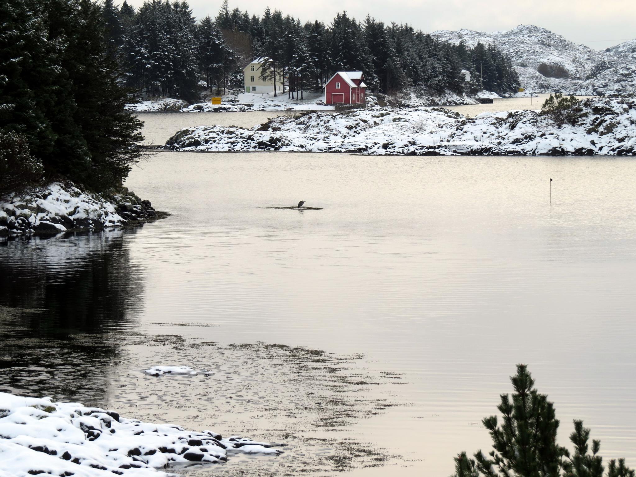 #Norway#Austrheim#Rongevær#Winter# by marit