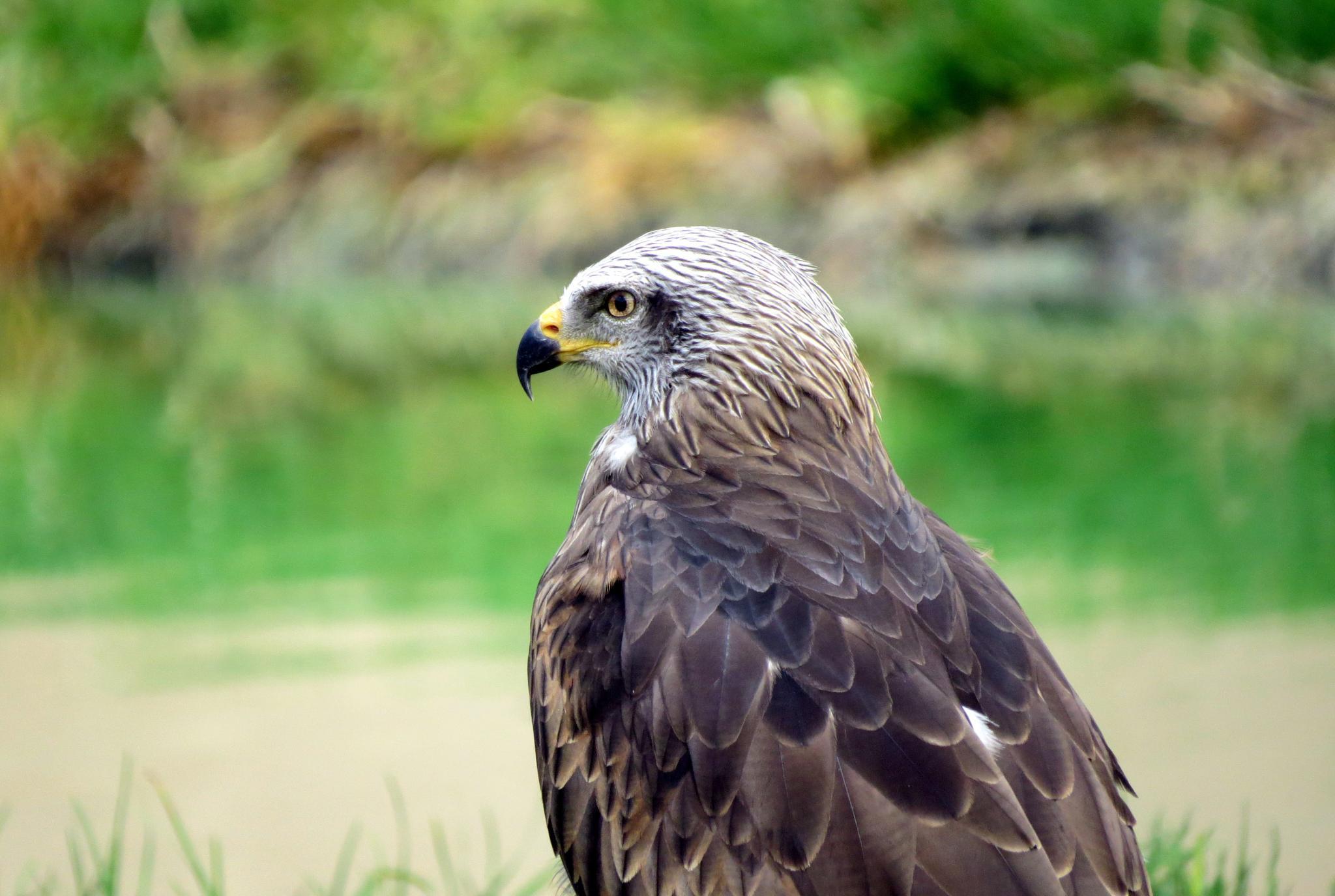 #Lanzarote#Eagle# by marit