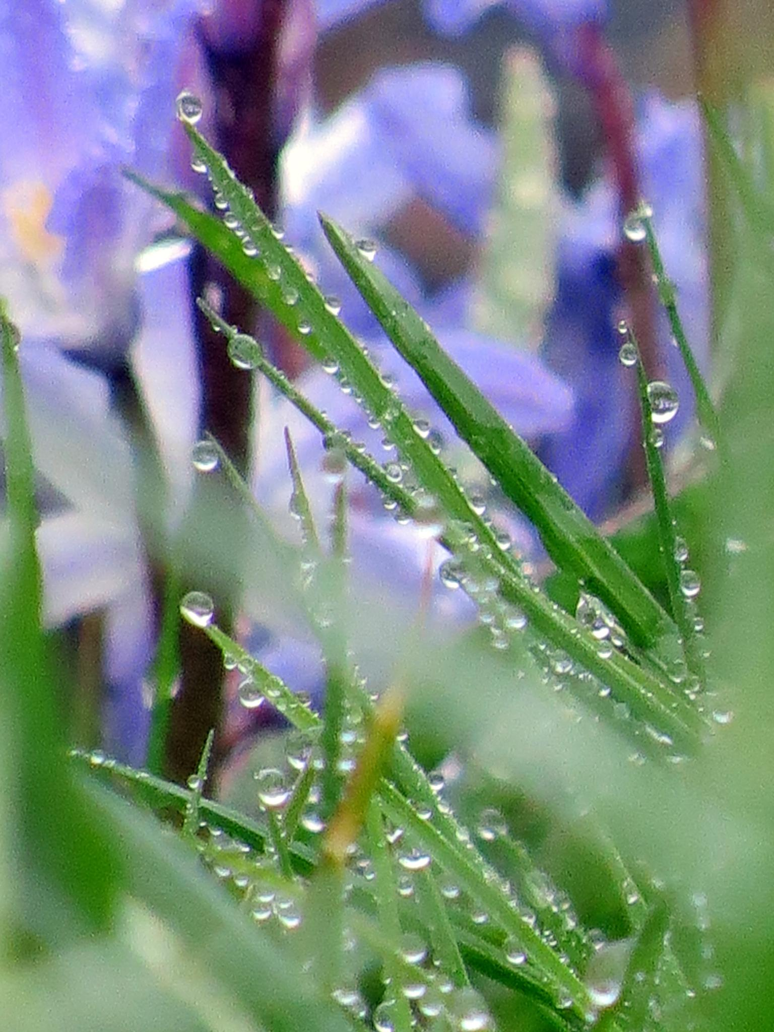 #Spring#Straw#Drops# by marit