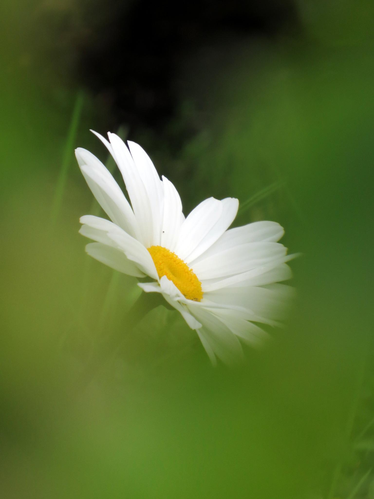 #Daisy by marit