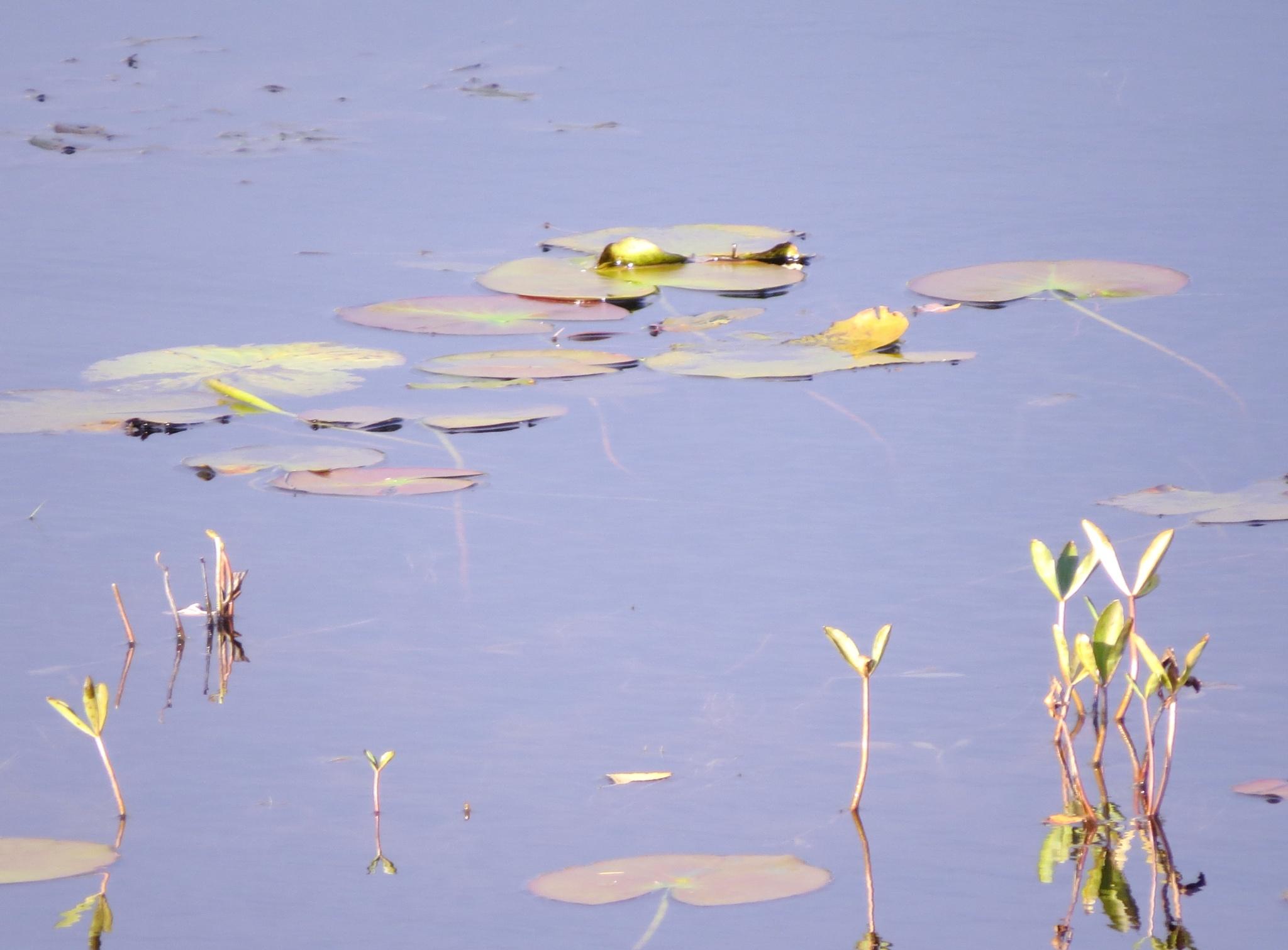#Lake by marit
