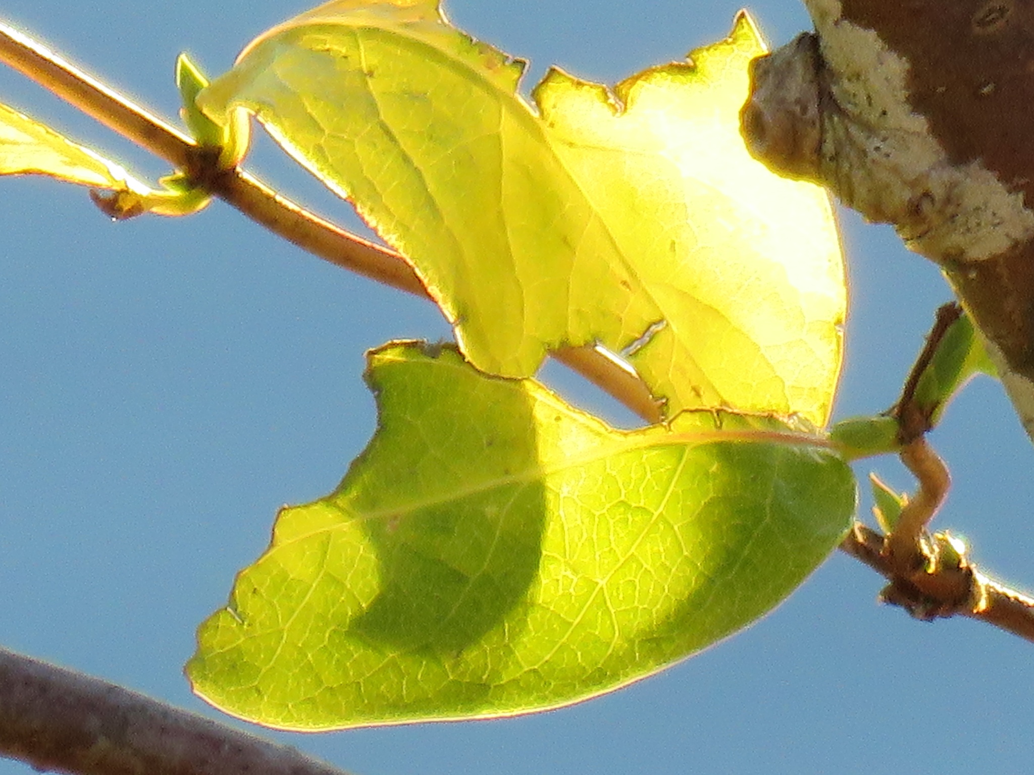 #Leaves by marit