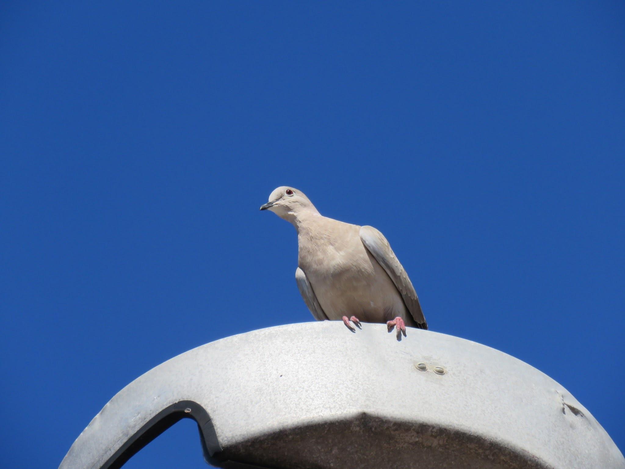 #Bird by marit