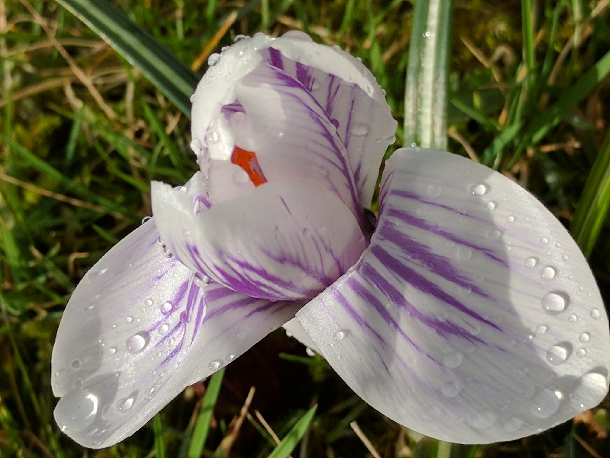 #White and Purple by marit