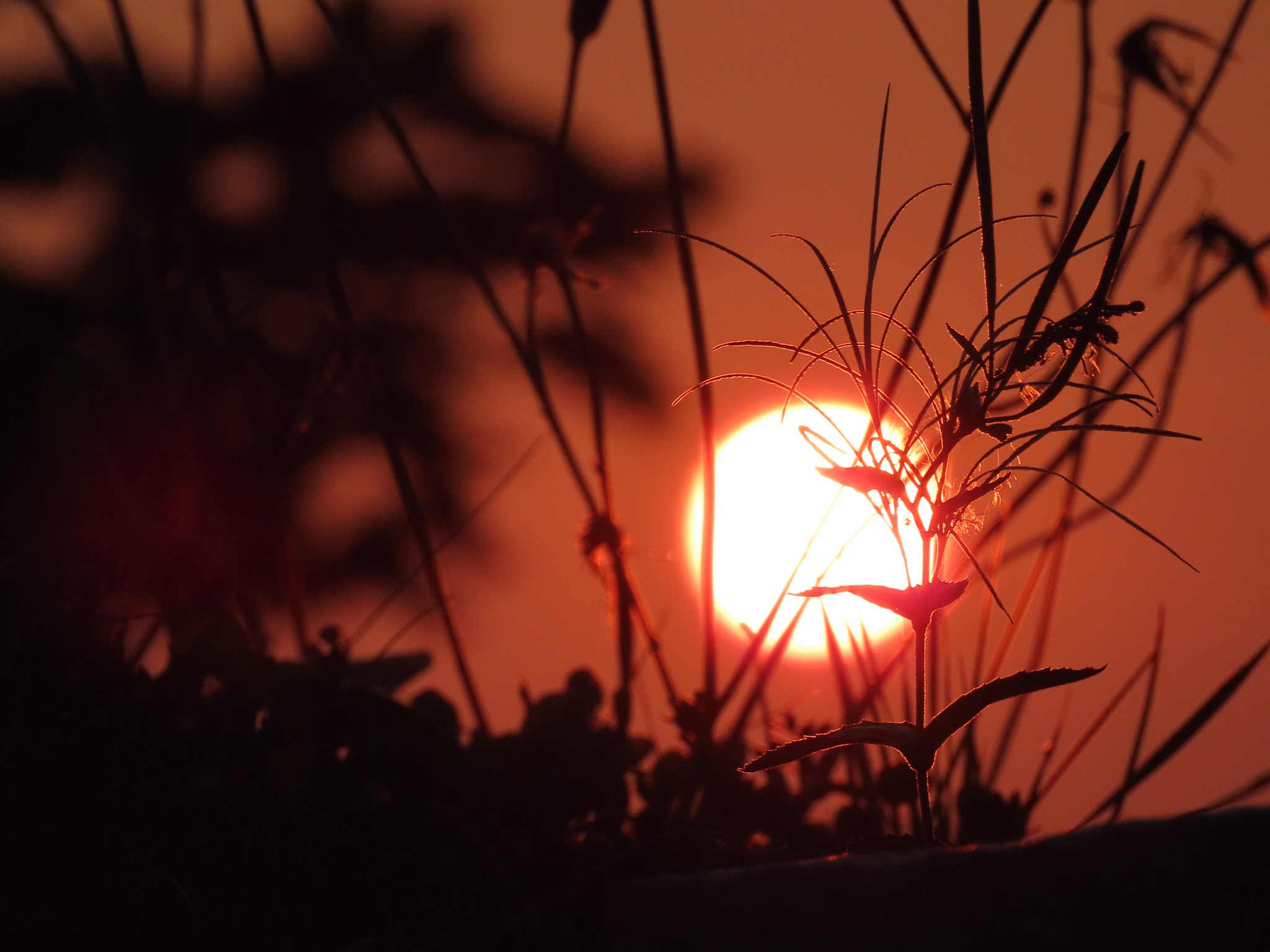 #Straw in sunset by marit