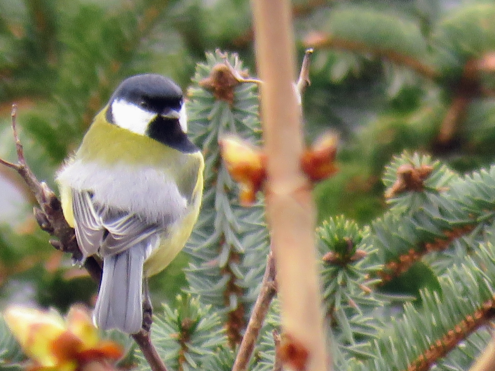 #Tit by marit