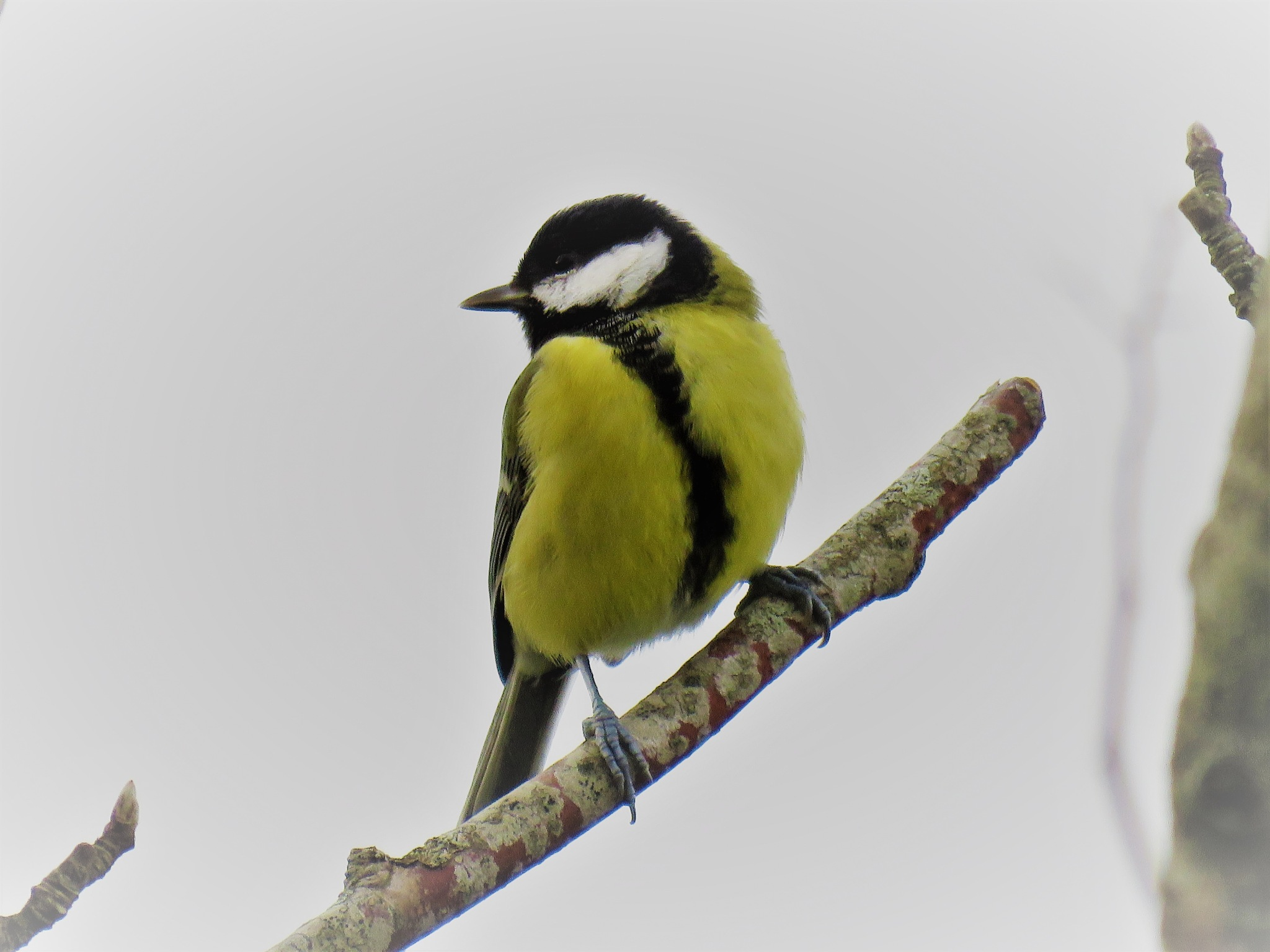 #Titmouse by marit