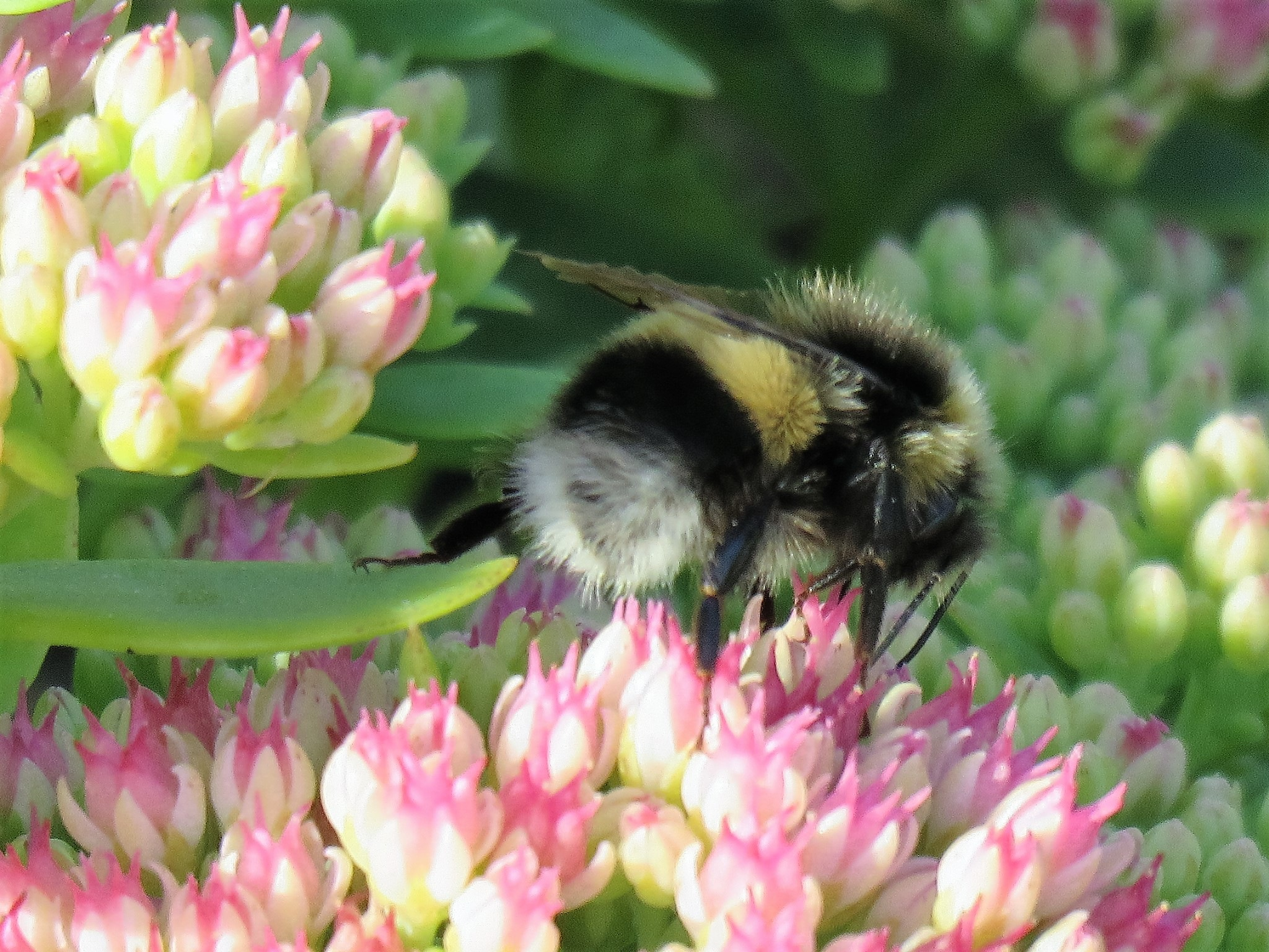 #Flower and Bumblebee by marit