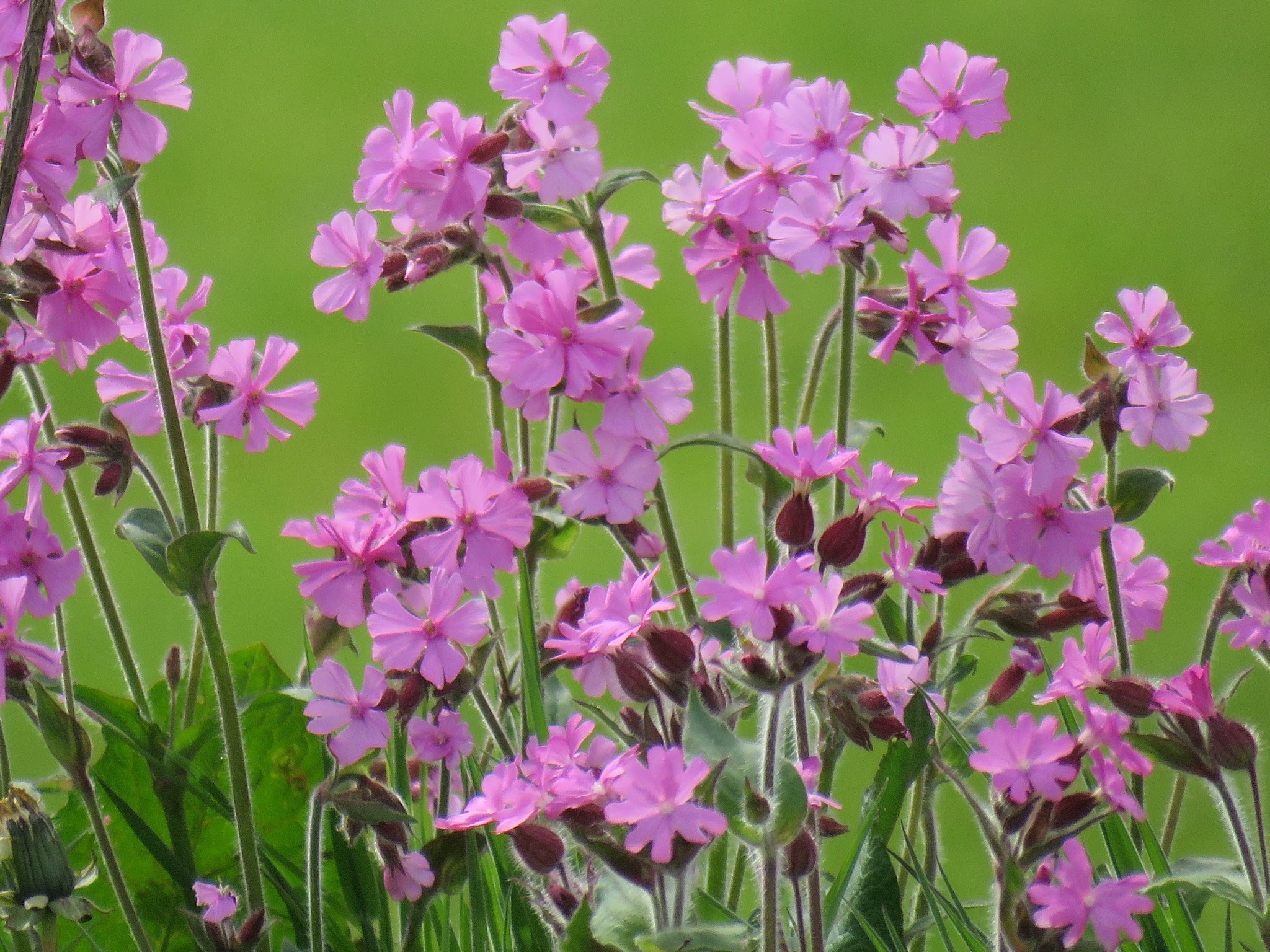 #Wild flowers by marit