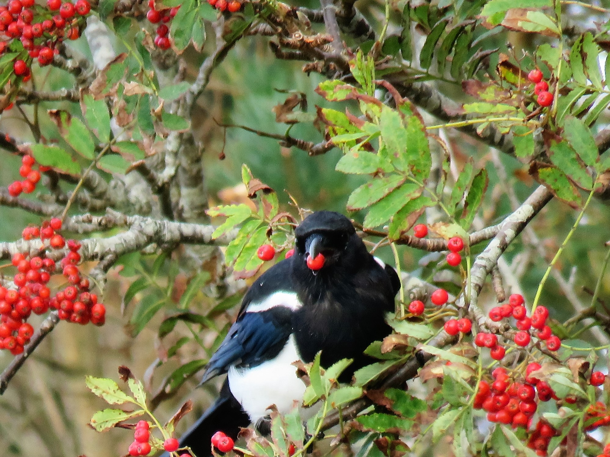 #Magpie by marit