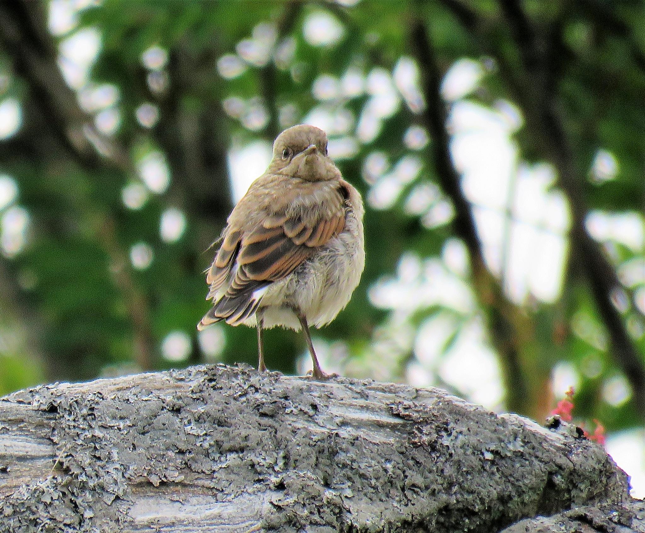 #Babybird by marit