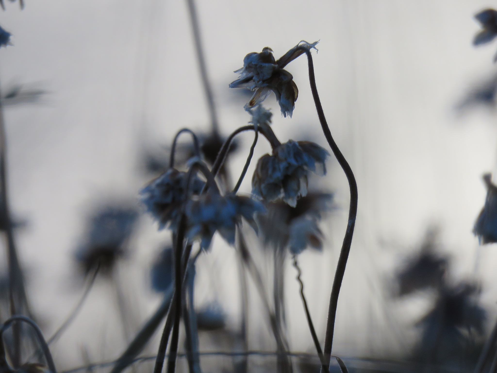 #End of the season by marit