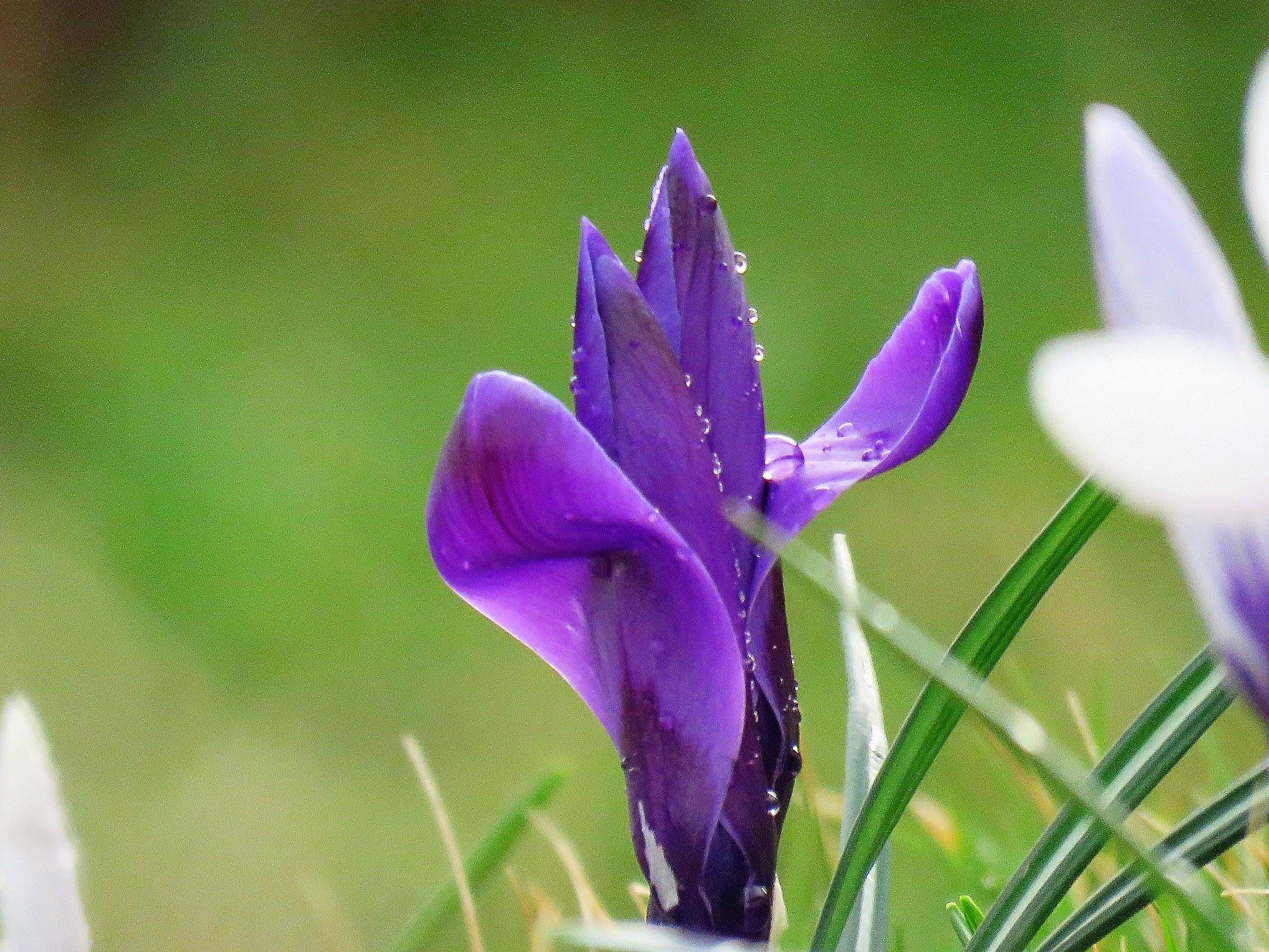 #Purple by marit
