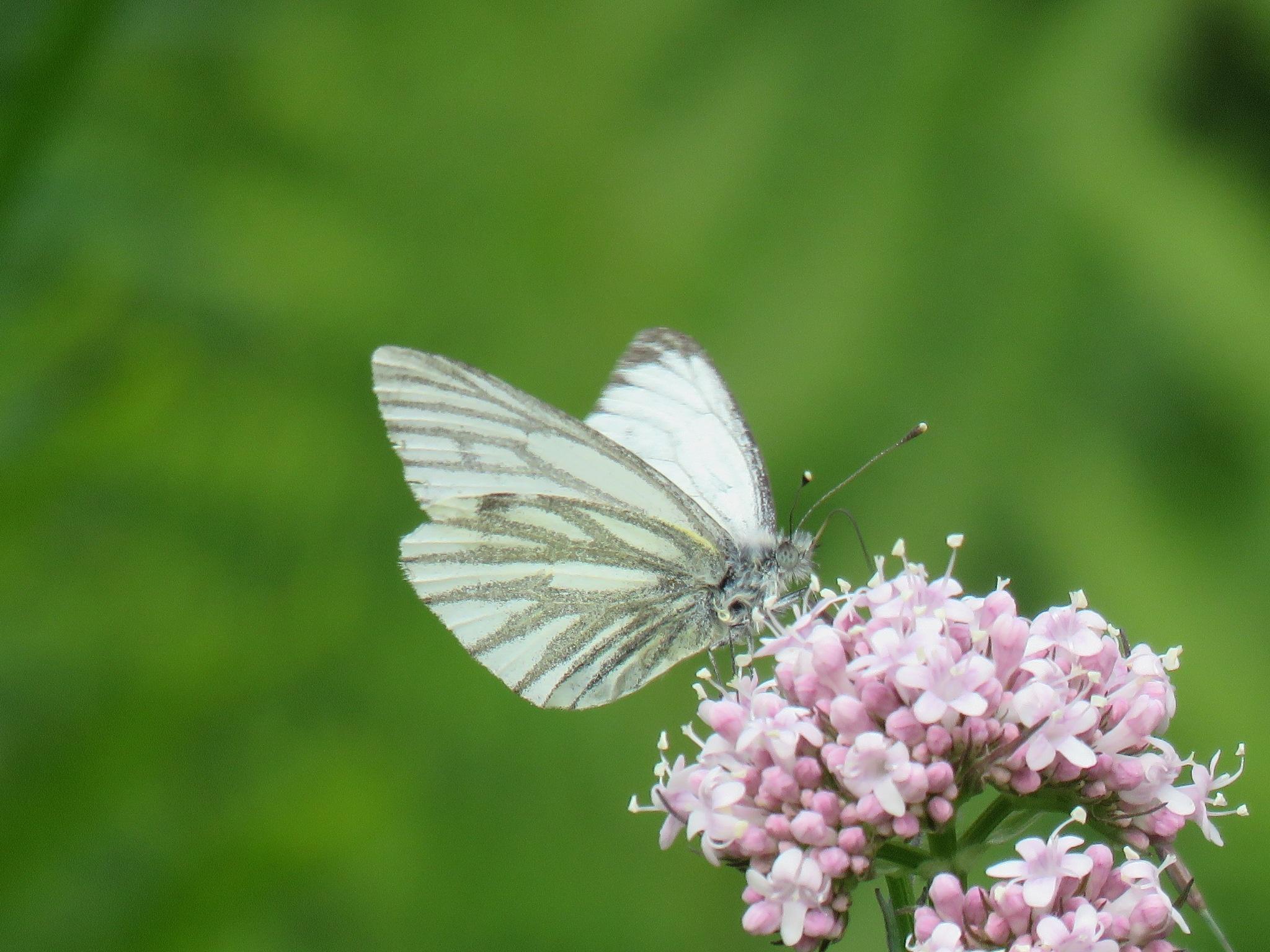 #Butterfly by marit