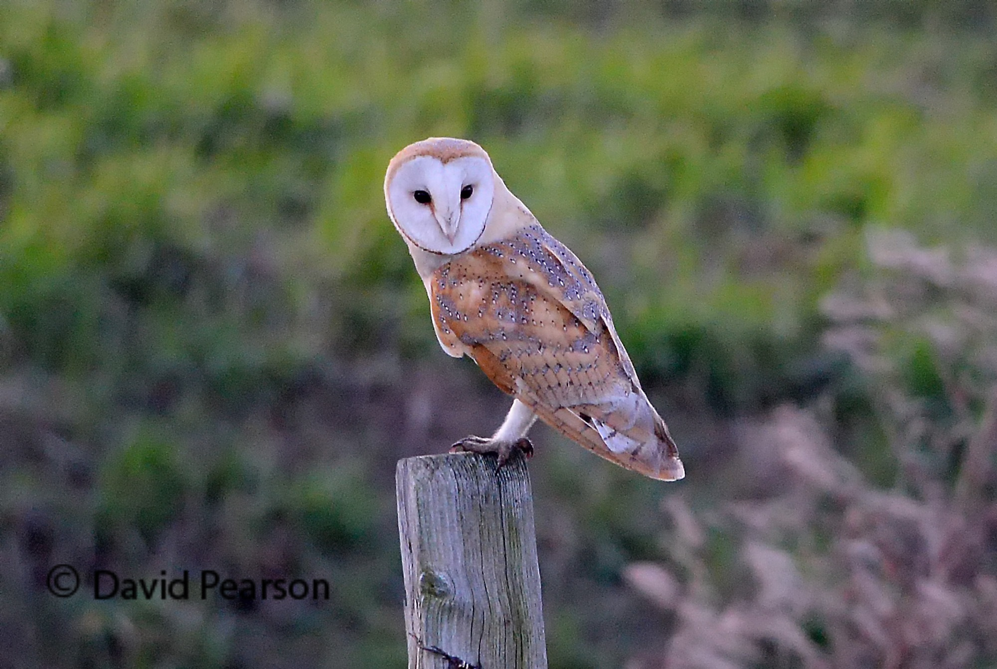 Photo in Nature #owl #wild #nature #riverside #bird