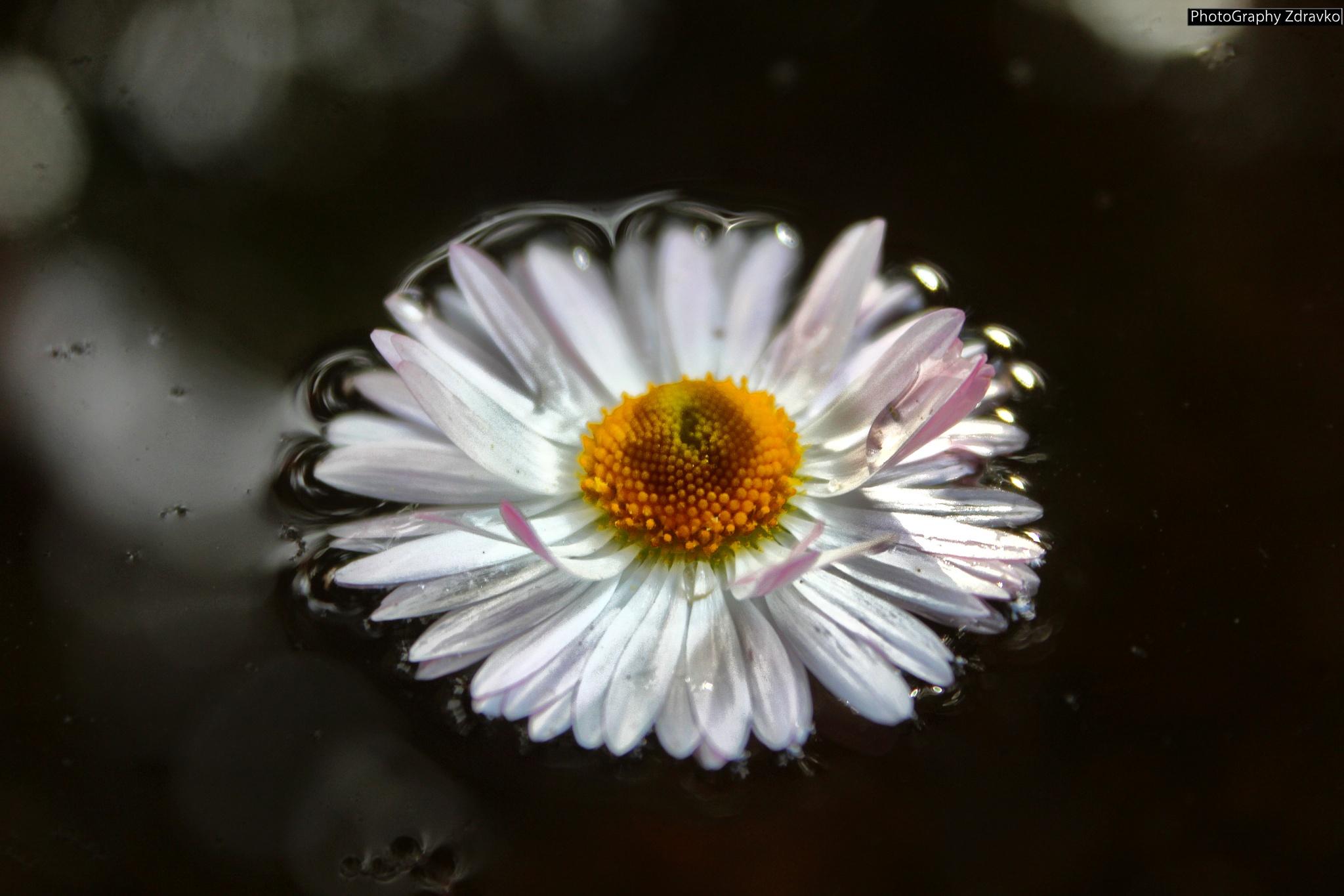 Flower by zdravko.petkovski.3