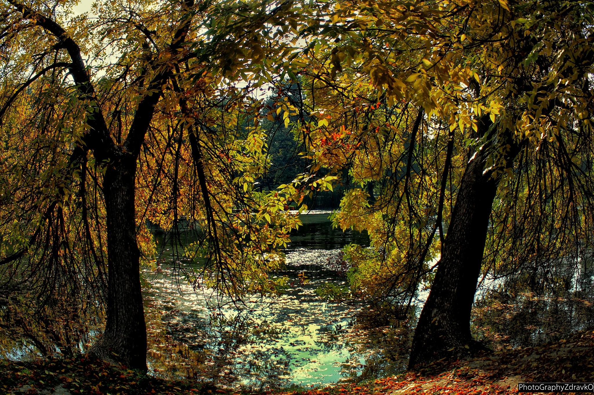 Lonely trees  by zdravko.petkovski.3