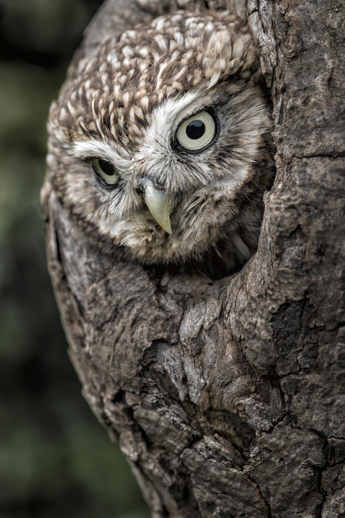 Peek A boo  by Trevor Shelley
