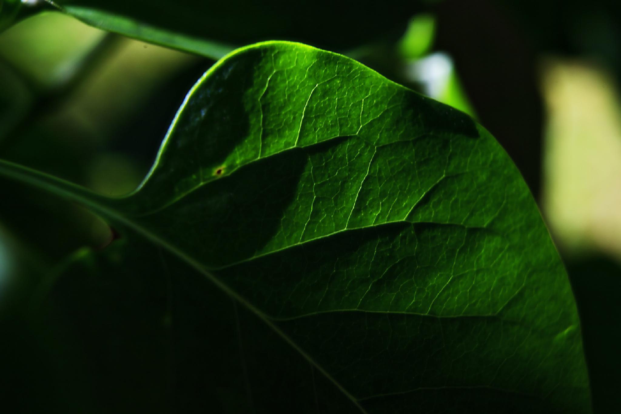 I Am green by enrico.seri.16