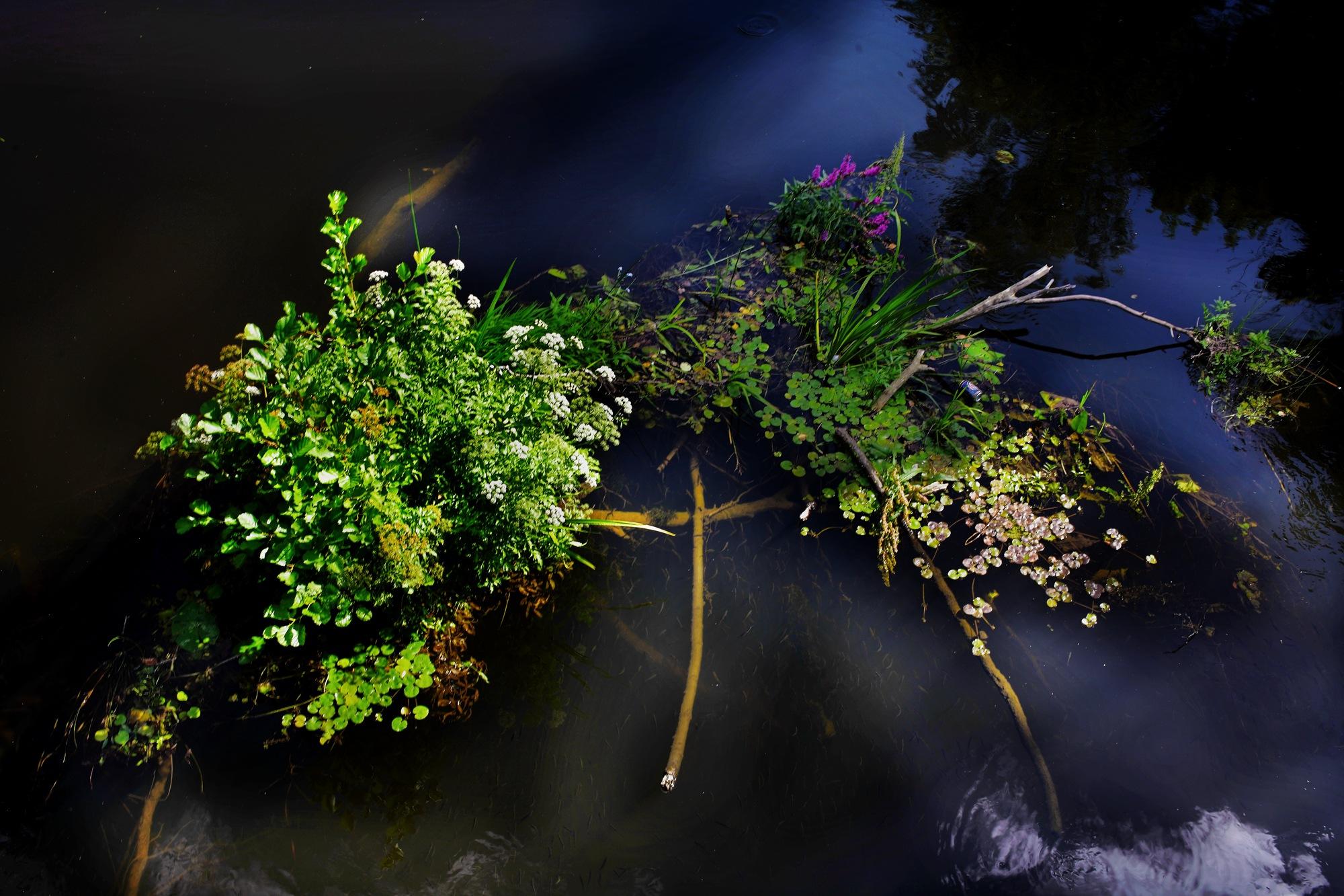 Bouquet.. by enrico.seri.16