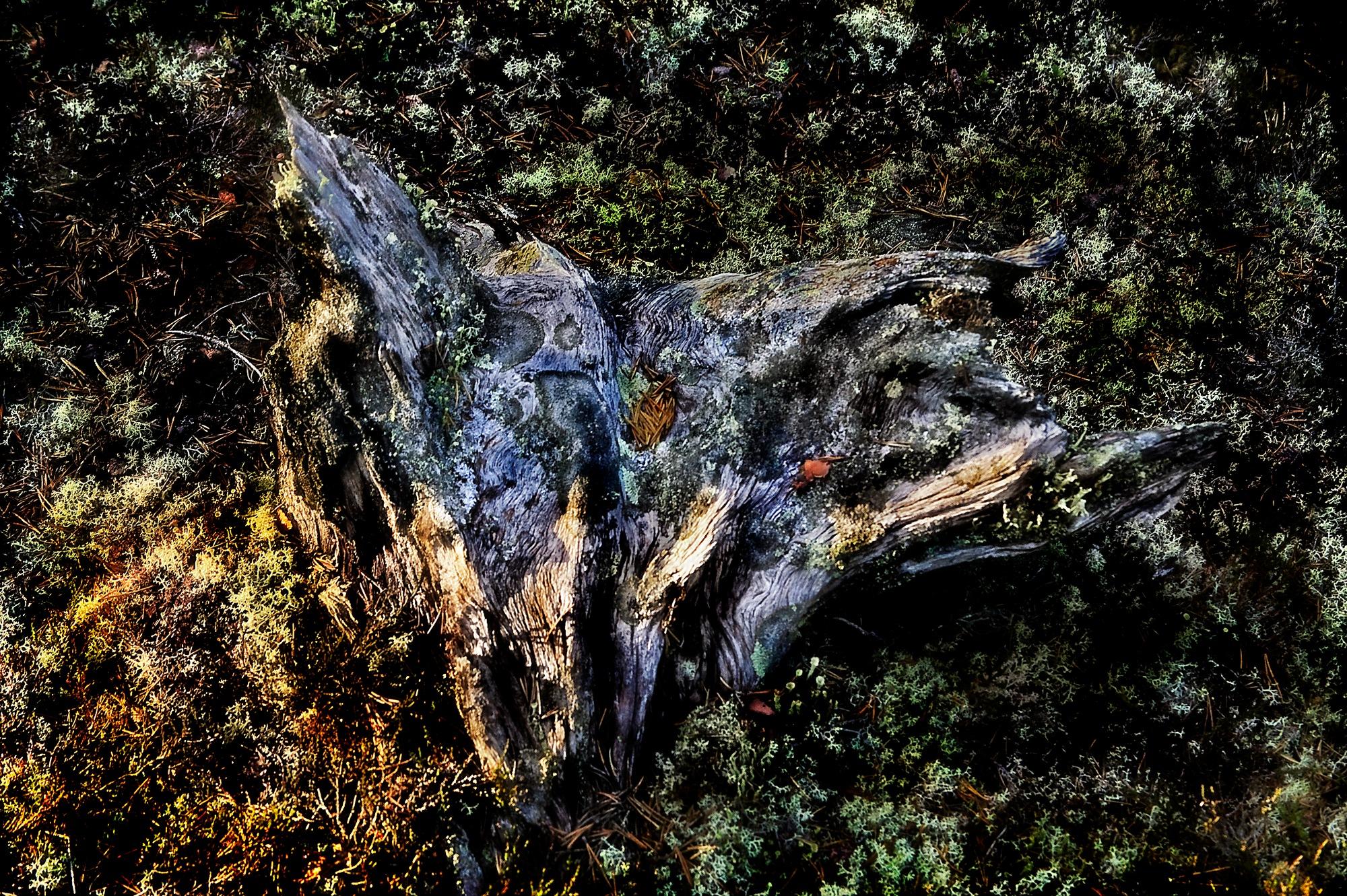 Dead but still alive.. by enrico.seri.16