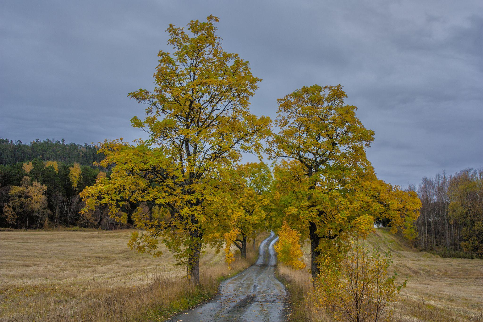 Autumn at Geilberget by Odd Rune Wang