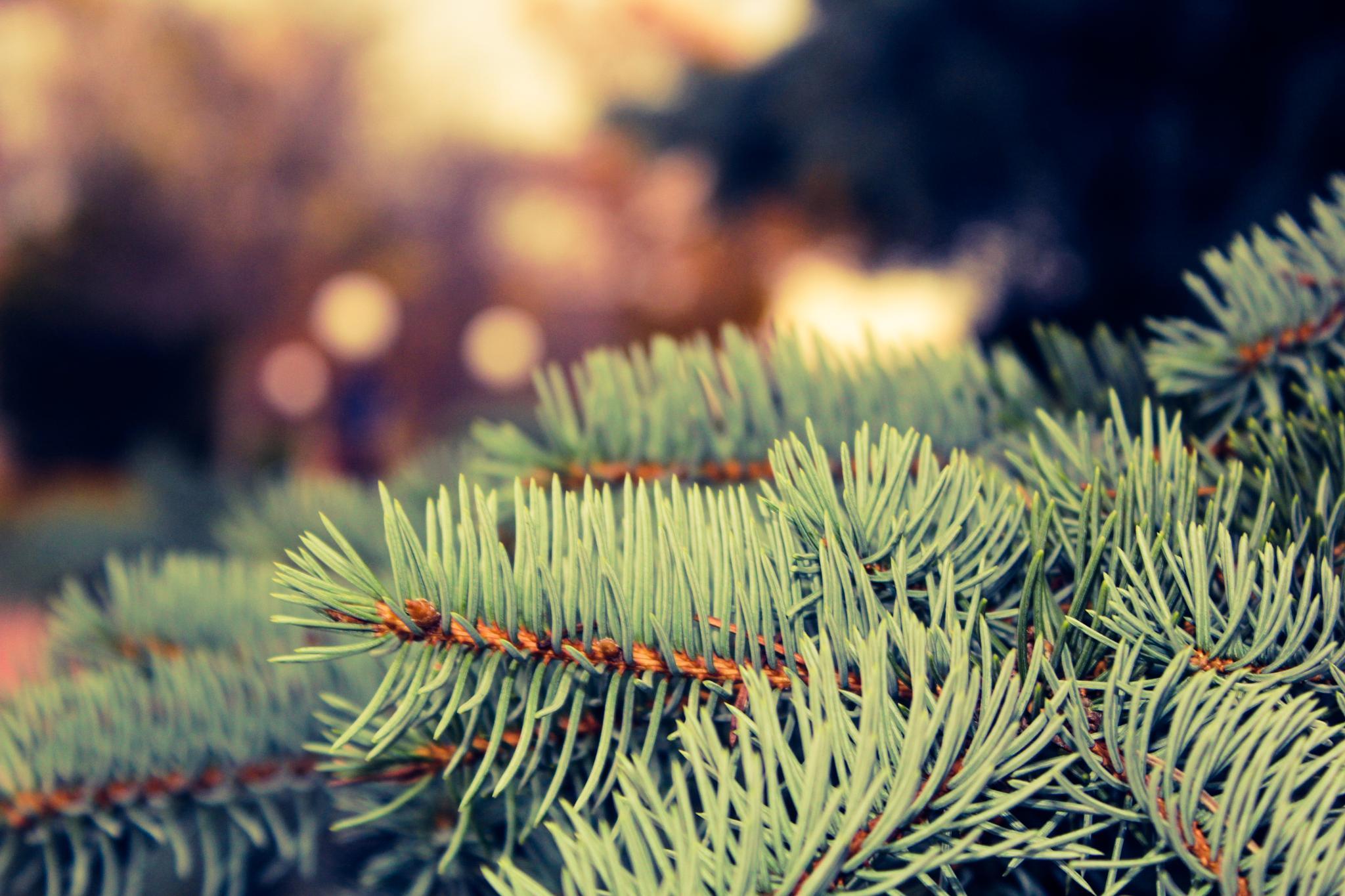 Photo in Macro #tree #green #clear #blur #macro