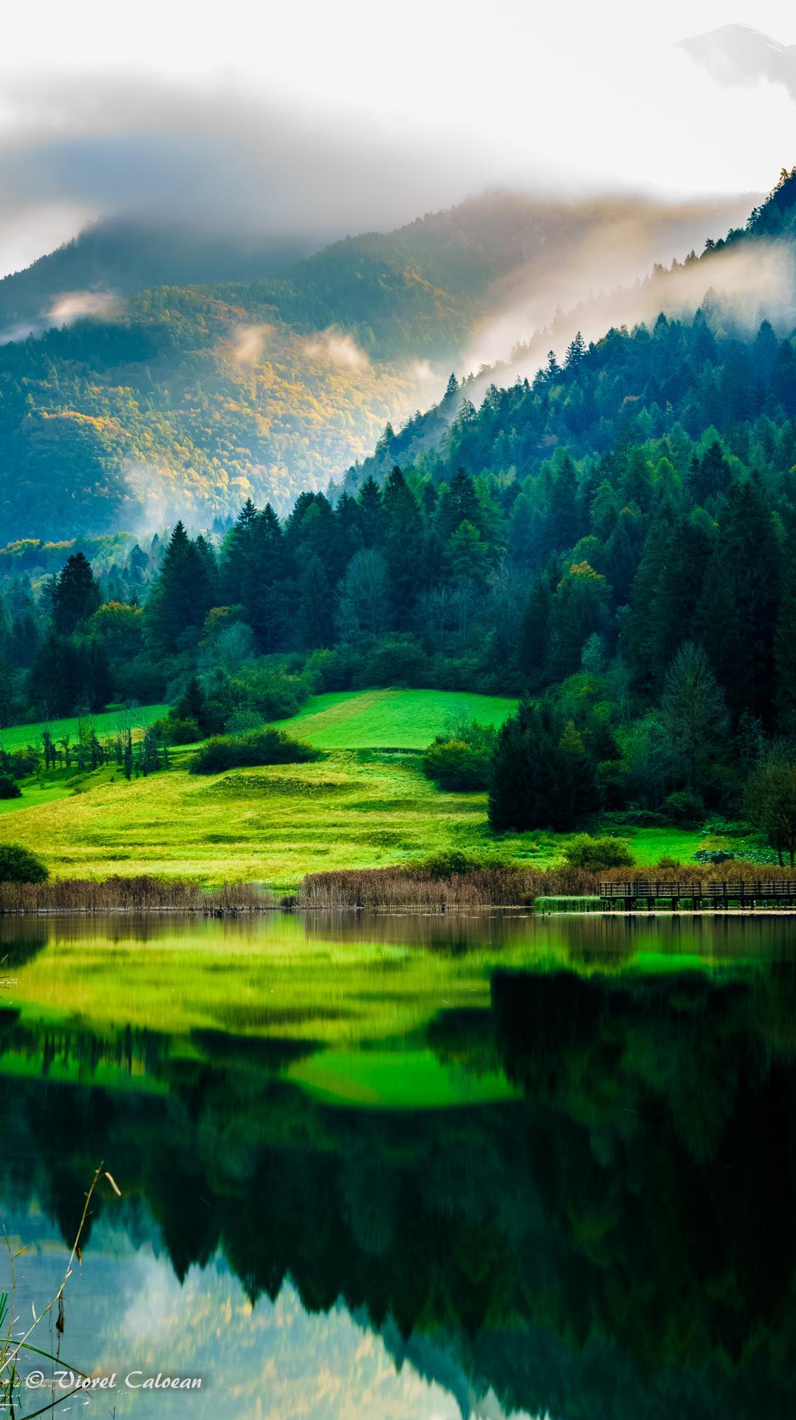 green by viorel.caloean