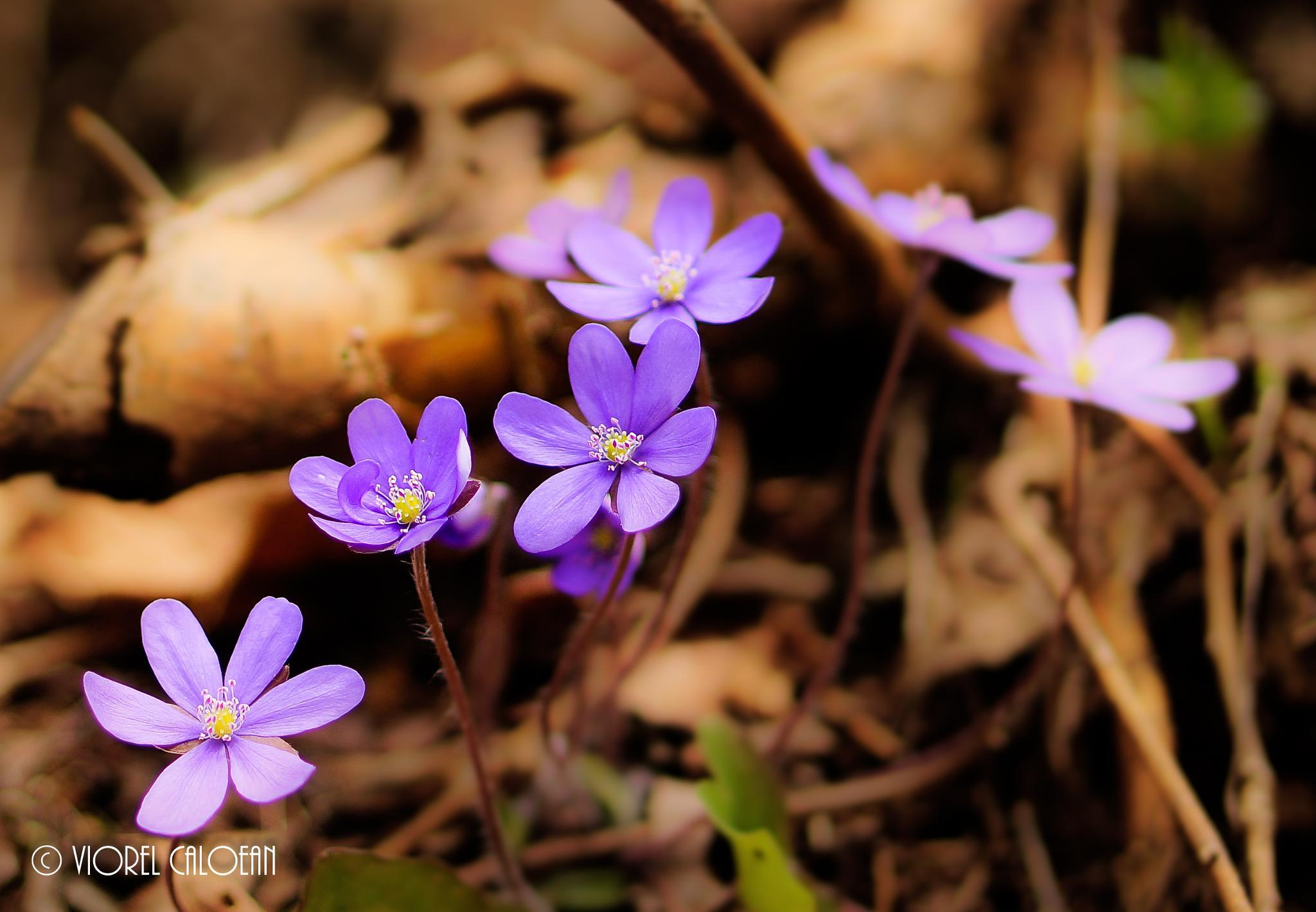 nature's beauty by viorel.caloean