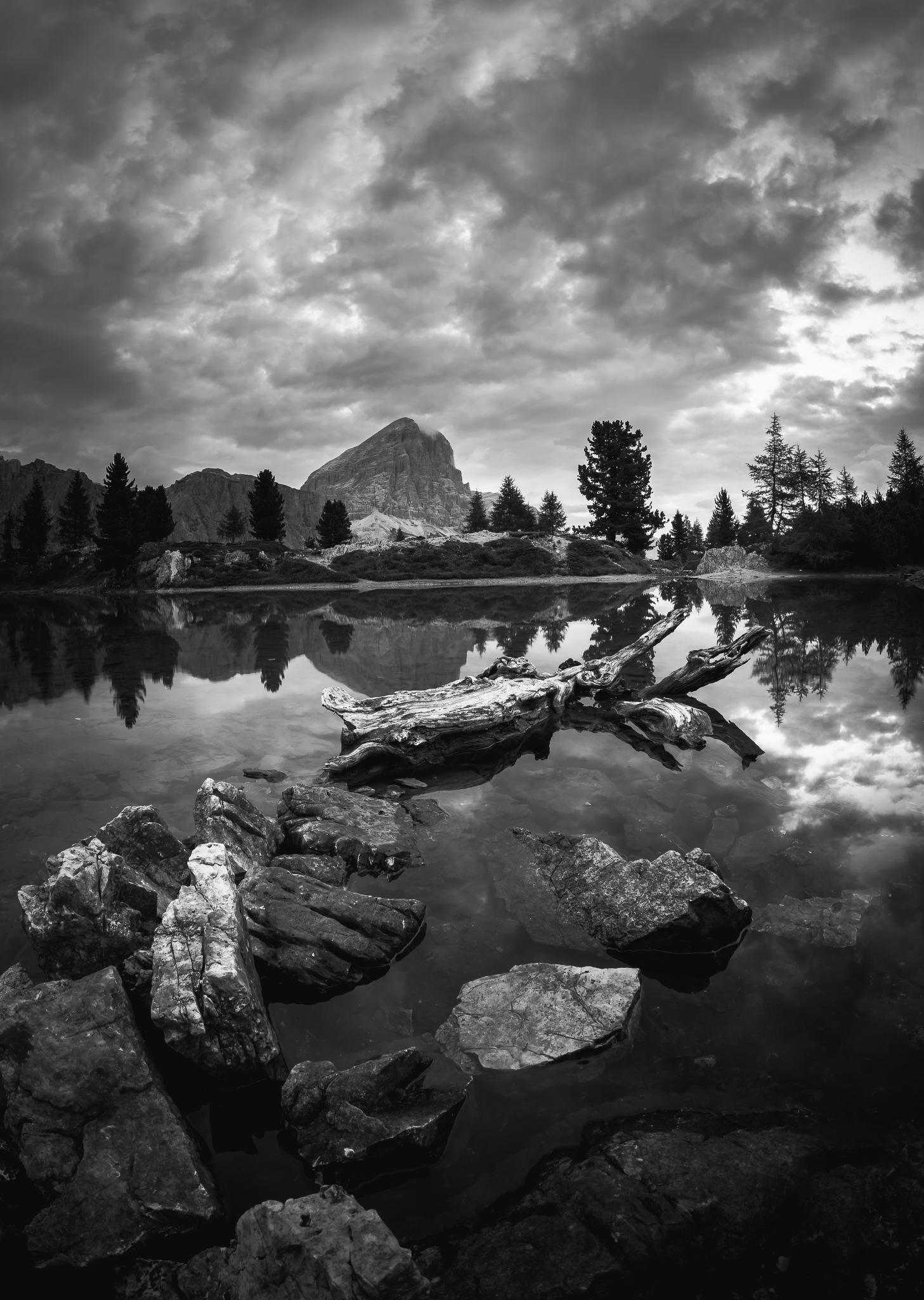 nature by viorel.caloean