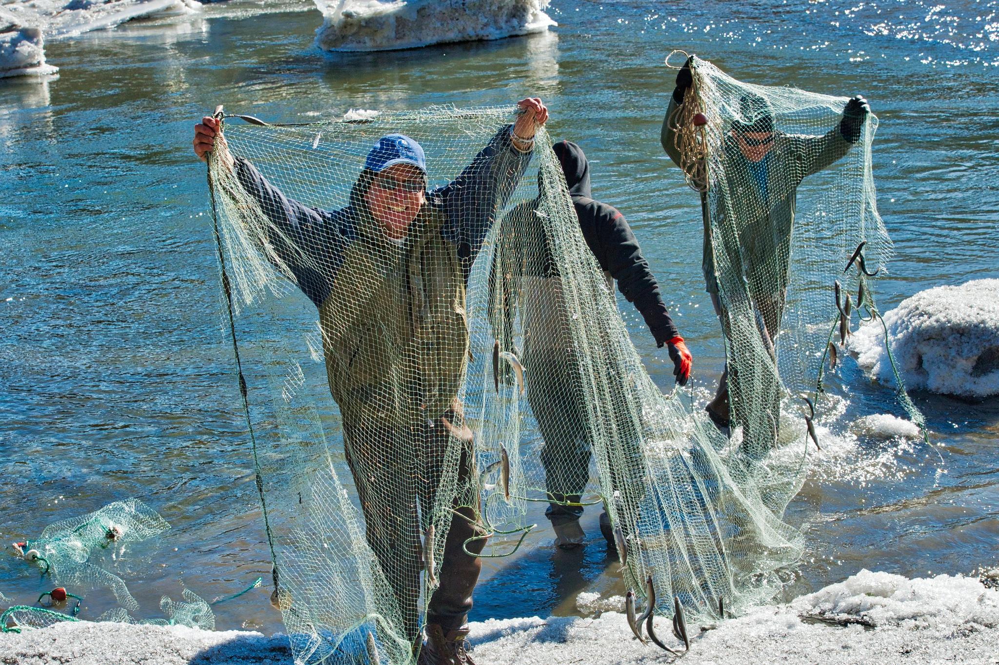 fish in the net by Evan Spellman