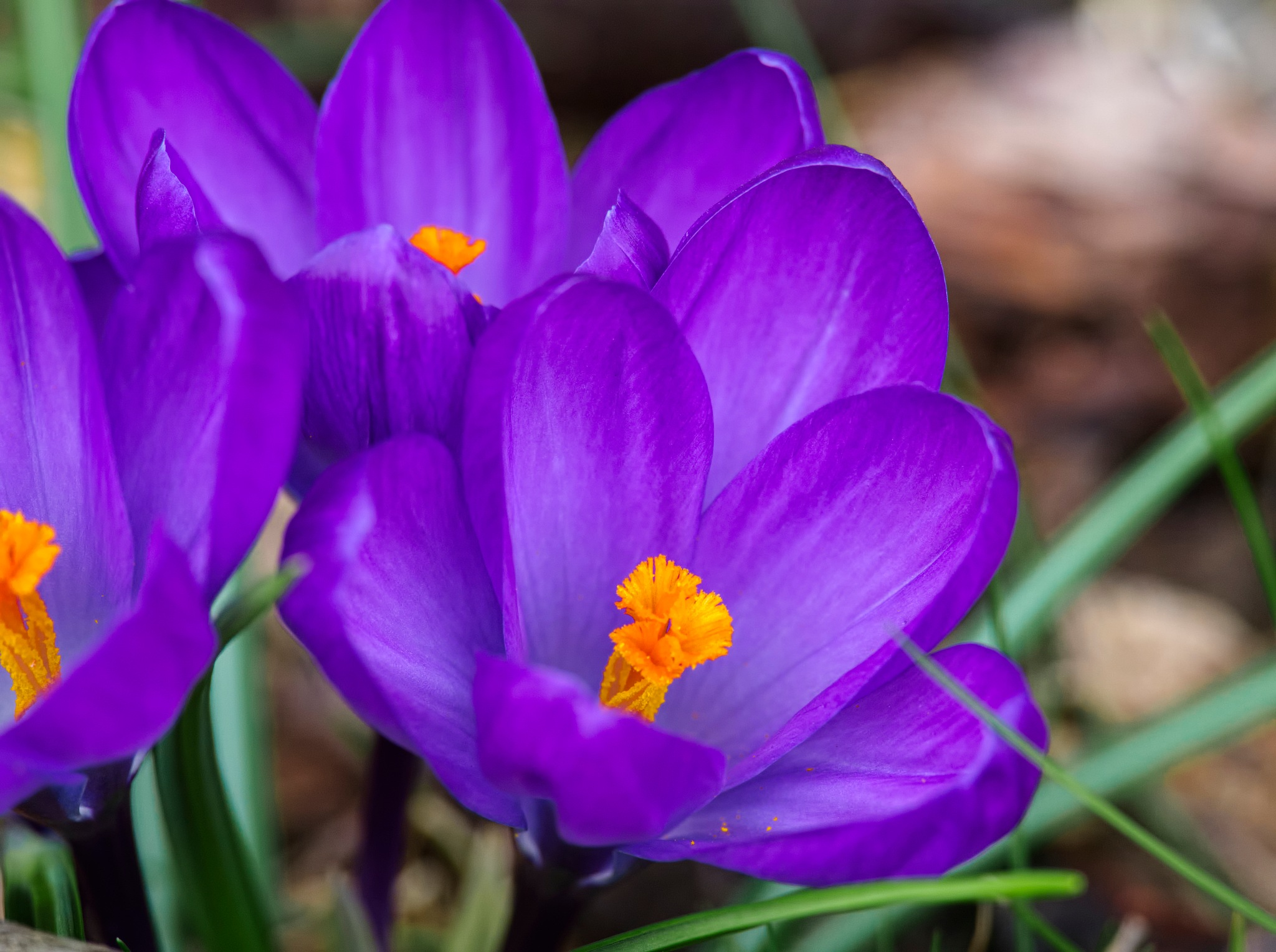 Spring flowers are up by Evan Spellman