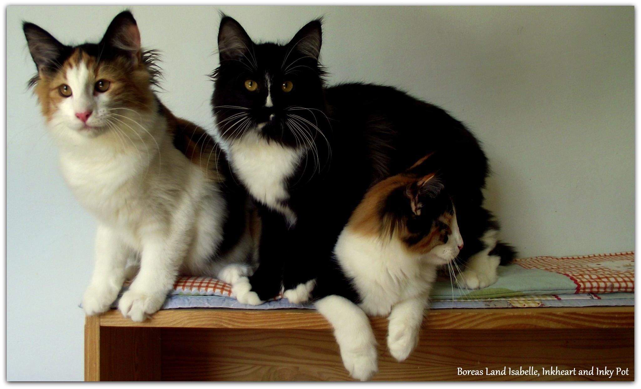 What a trio! by Boreas Land