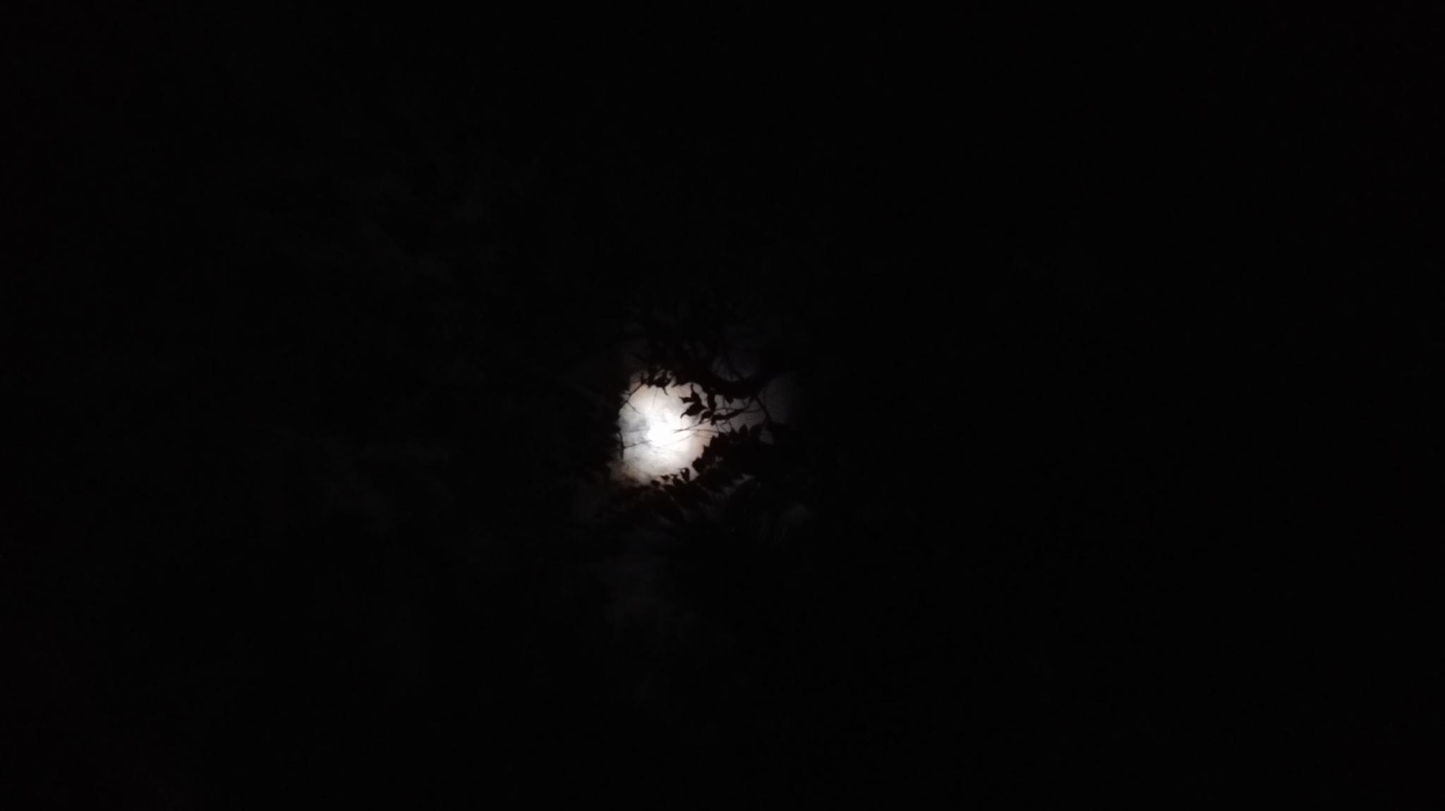 moon light via tree leaves by najaath.jmm.3