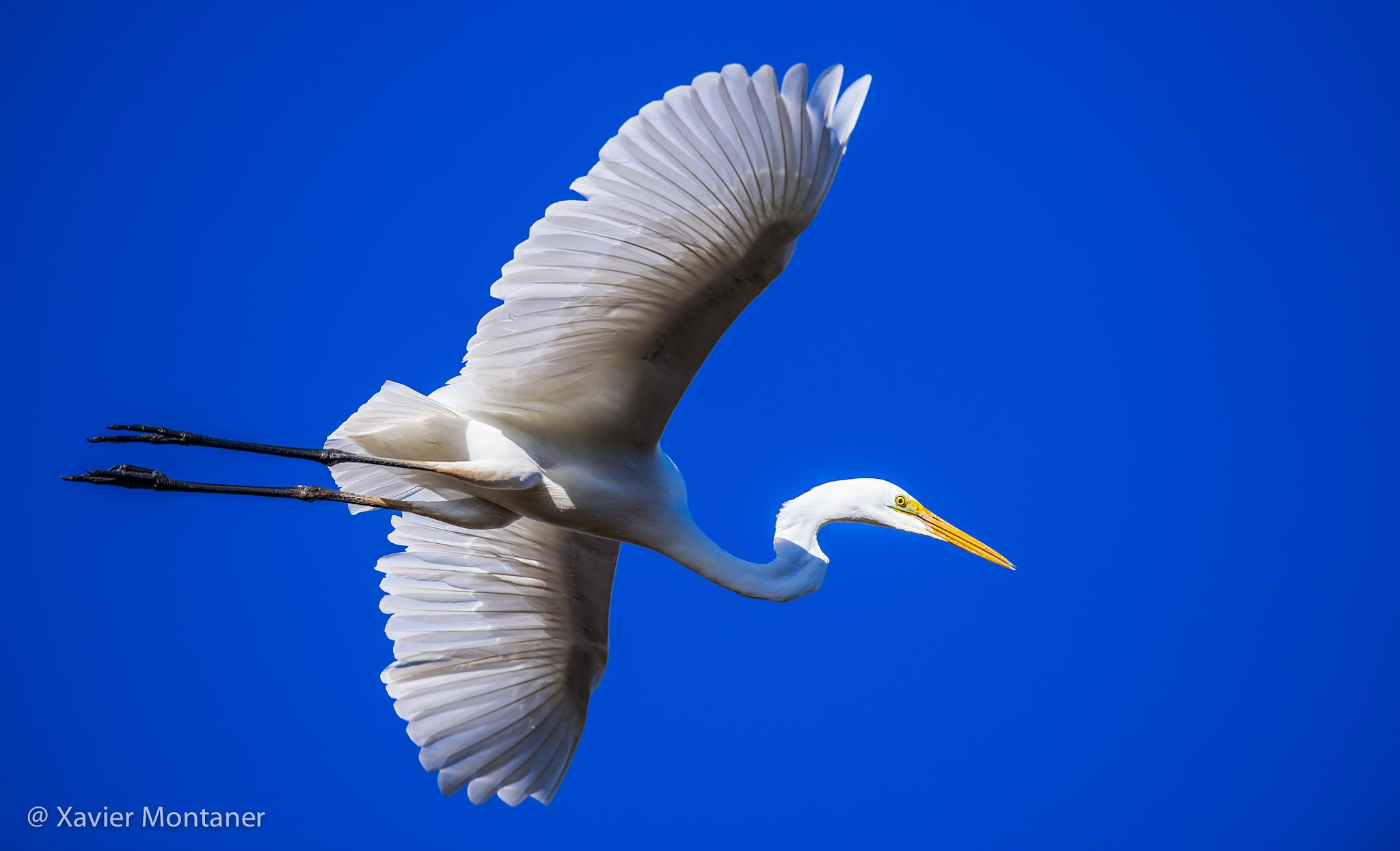 Photo in Animal #egret #bird #wildlife