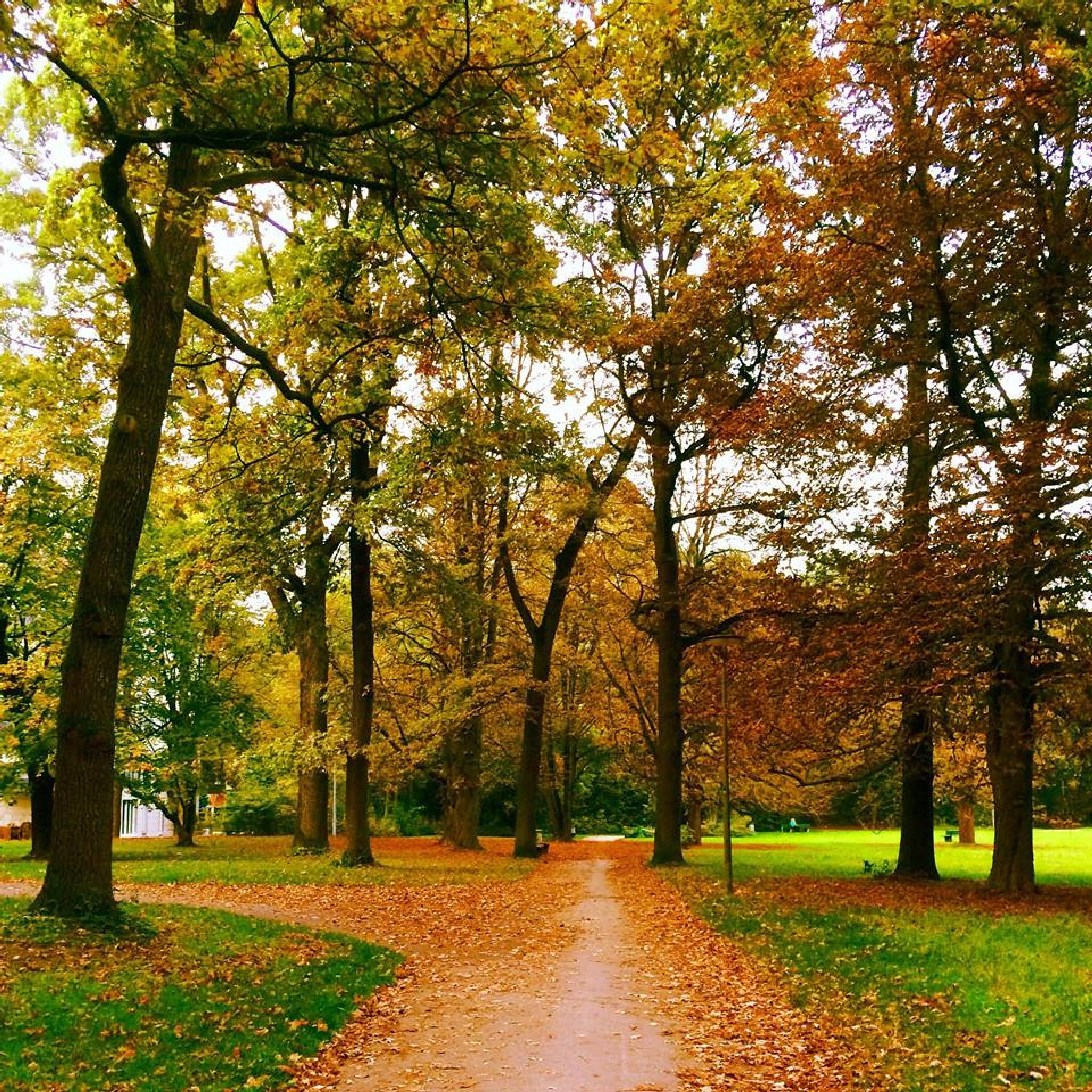 color of autumn  by blende_muc