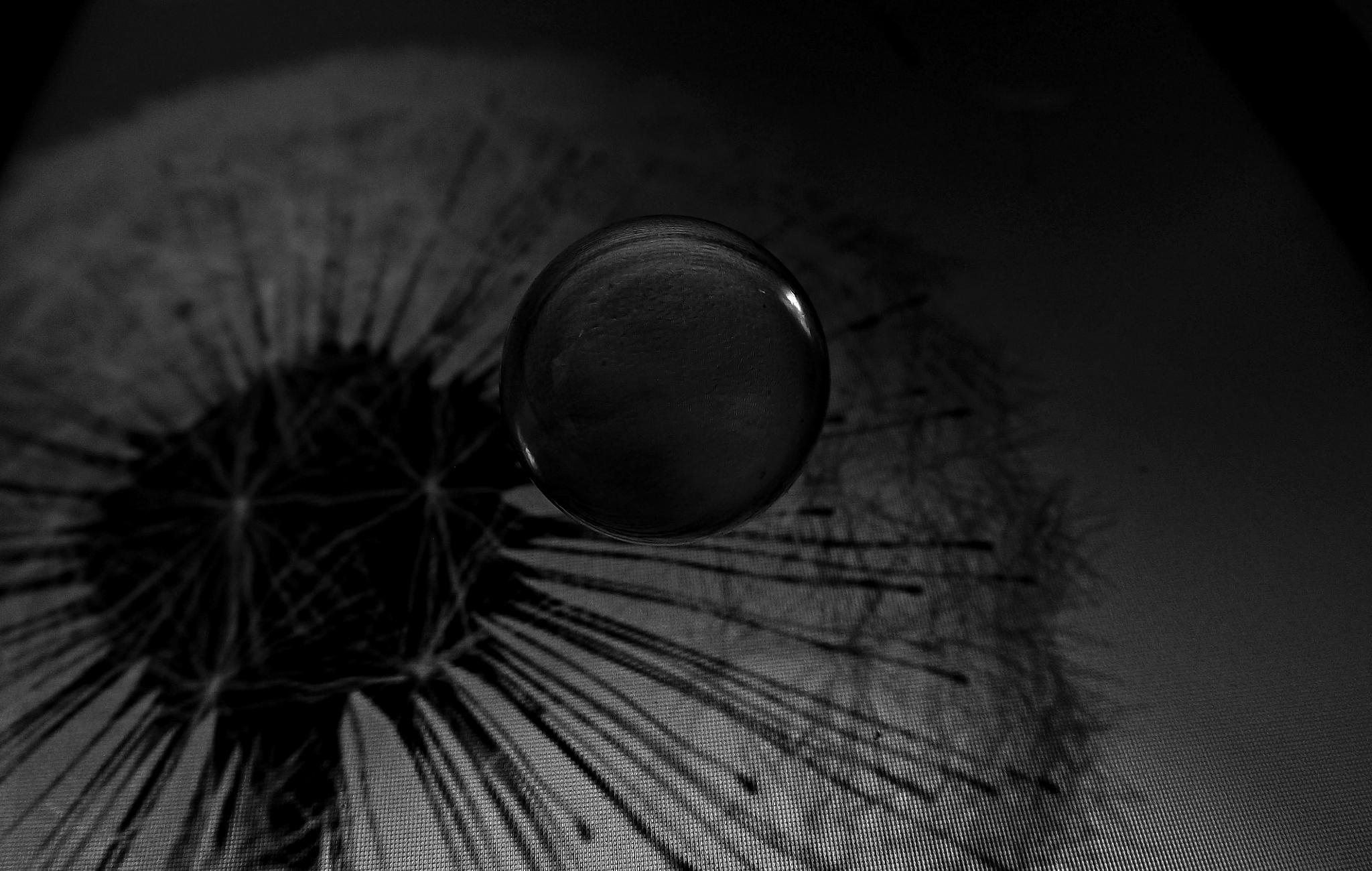 Photo in Macro #macro #esfrea #sphere #p&b #iris