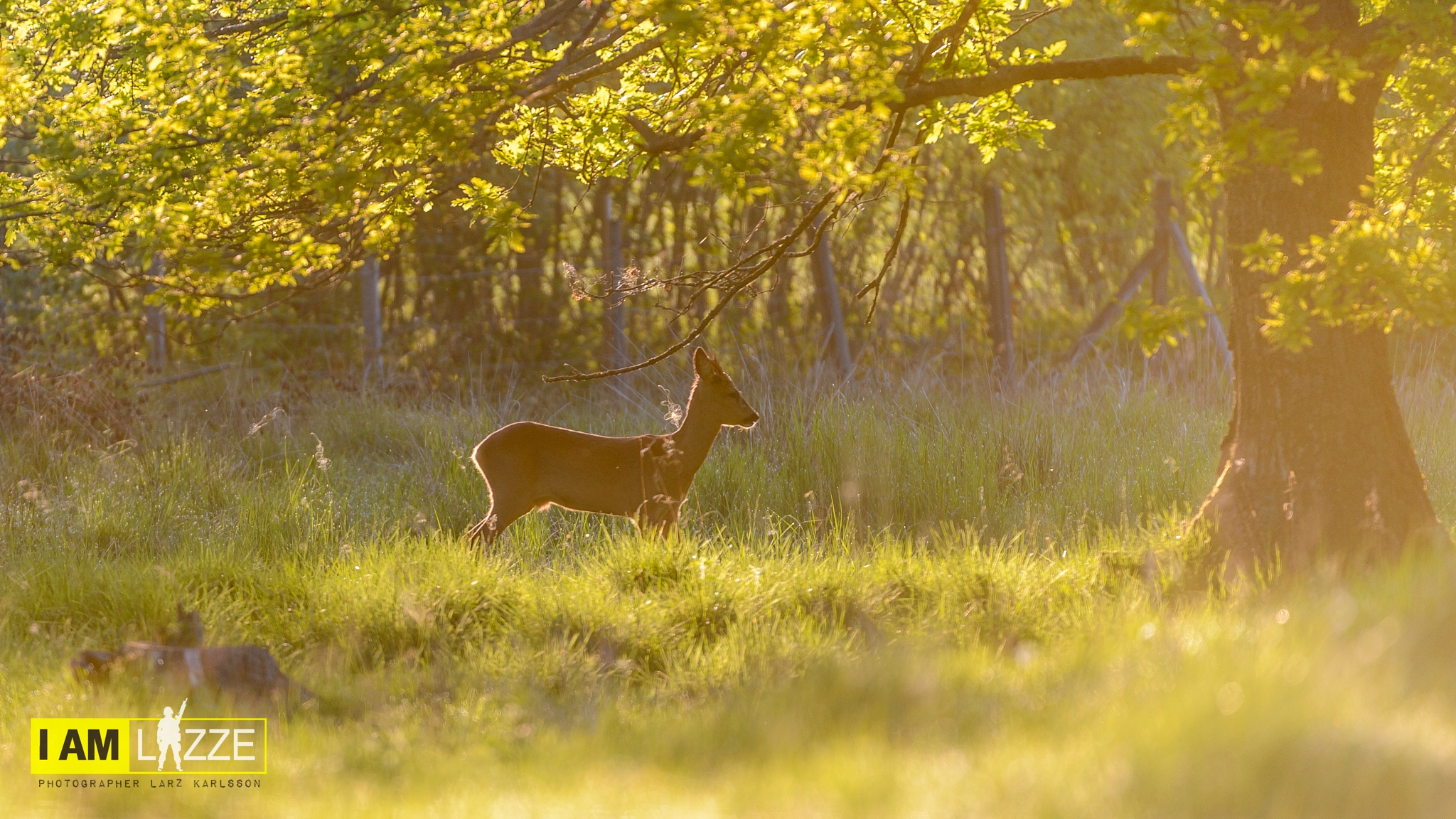 Early morning light by IAMLAZZE