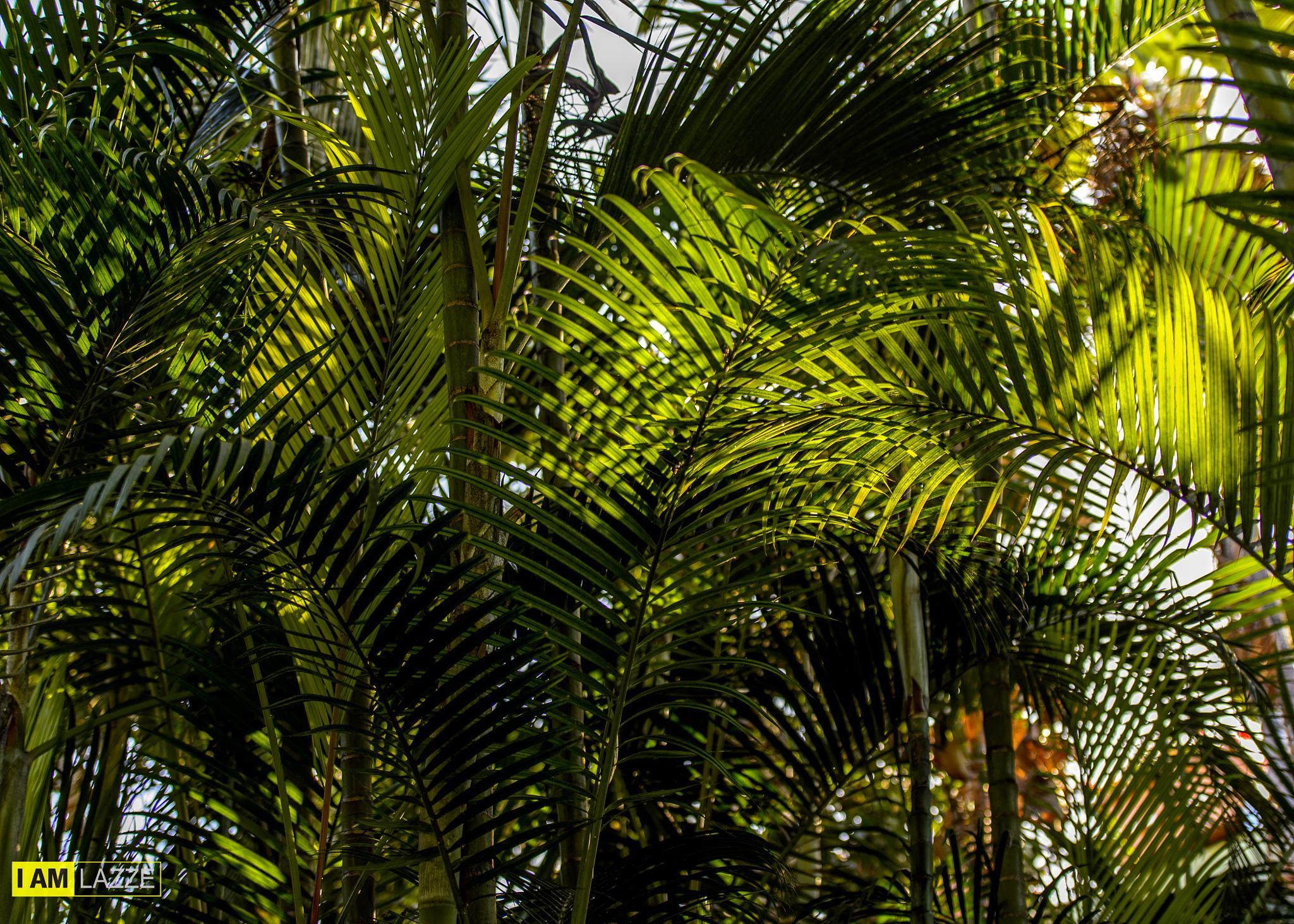 Jungle by IAMLAZZE