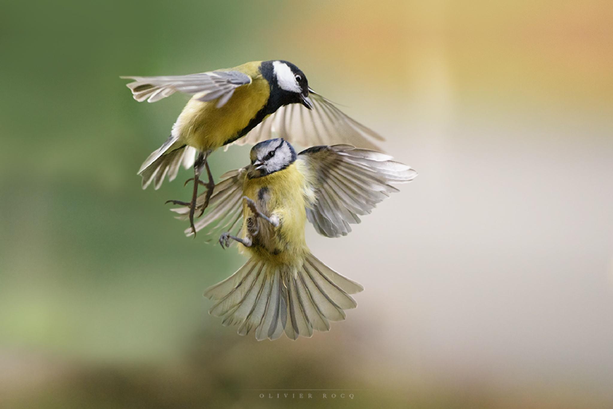 Bataille dans le ciel by rocqolivier